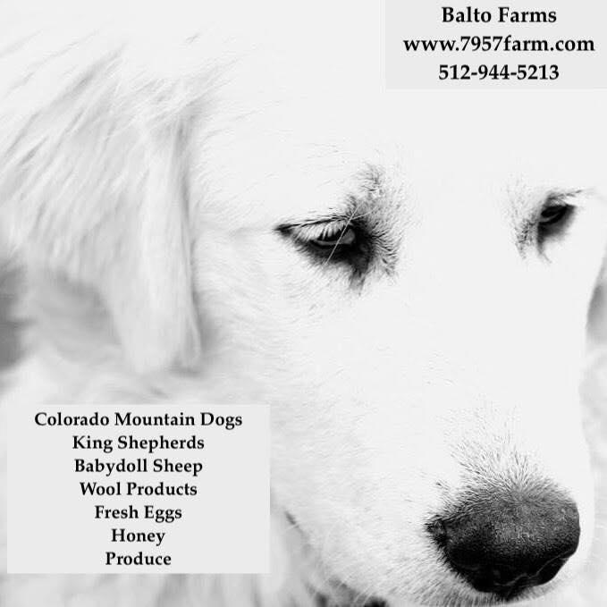 Balto Farms, Jen Pace Anderson, COLORADO www.7957Frams.com 512-944-5213 Colorado Mountain Dogs, King Shepherds, Babydoll Sheep, Wool Products, Fresh Eggs, Honey, Produce