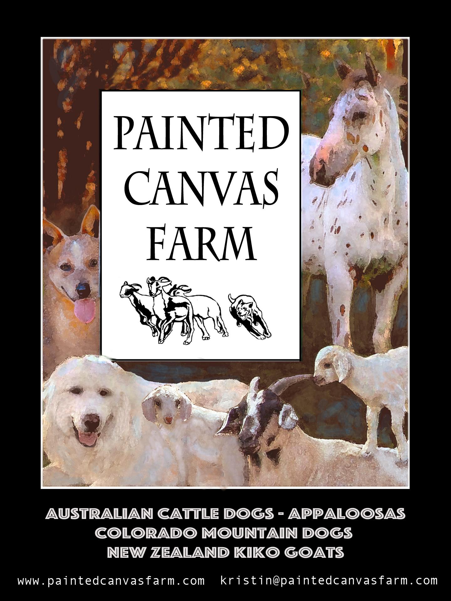 Painted Canvas Farm, MISSOURI Kristin Roberson  538 North Highway F, Lamar, MO -- 64759 417- 214- 4825    Kristin@PaintedCanvasFarms.com -- www.PaintedCanvasFarm.com Australian Cattle Dogs, Colorado Mountain Dogs, New Zealand Kiko Goats, Appaloosa Horses