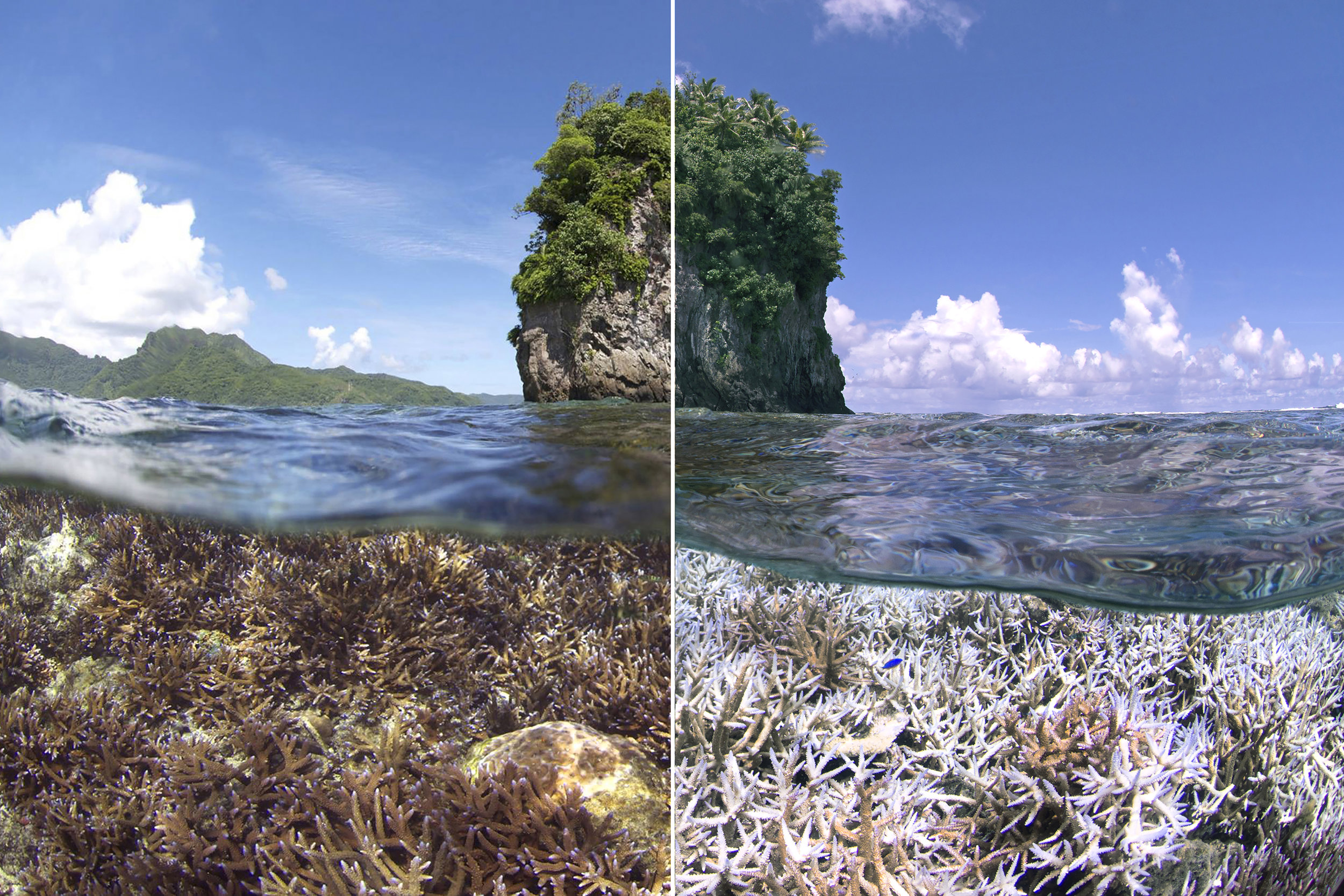 COMBINED BEfore & after - american samoa credit: the ocean agency / xl catlin seaview survey