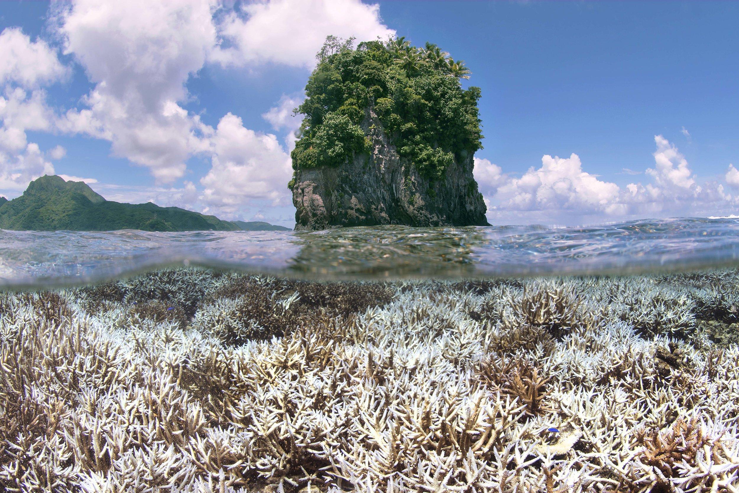 during bleaching - American Samoa - feb 2015 credit: the ocean agency / xl catlin seaview survey/