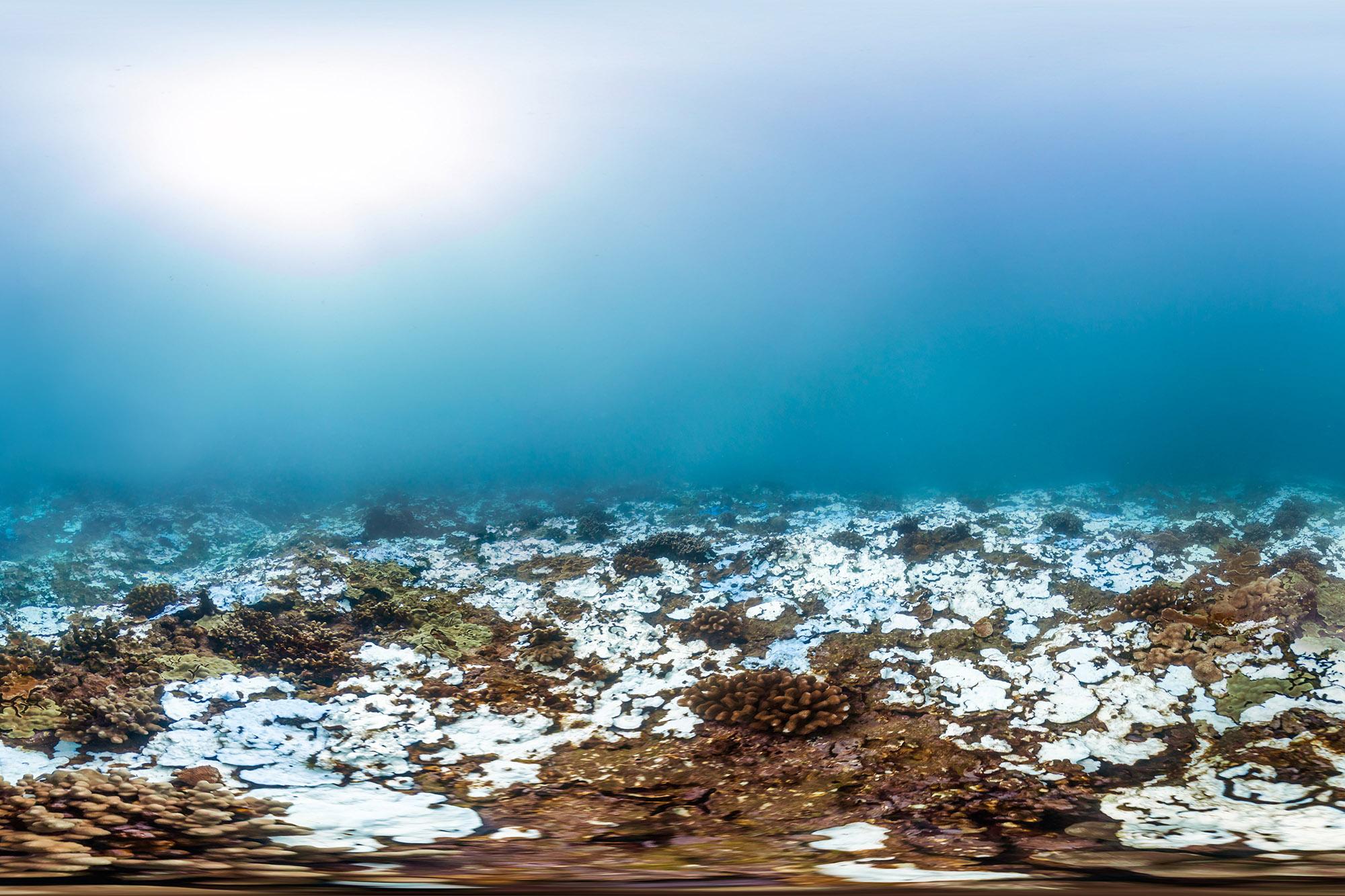 maui, hawaii, nov 2015 credit: THE OCEAN AGENCY / XL CATLIN SEAVIEW SURVEY
