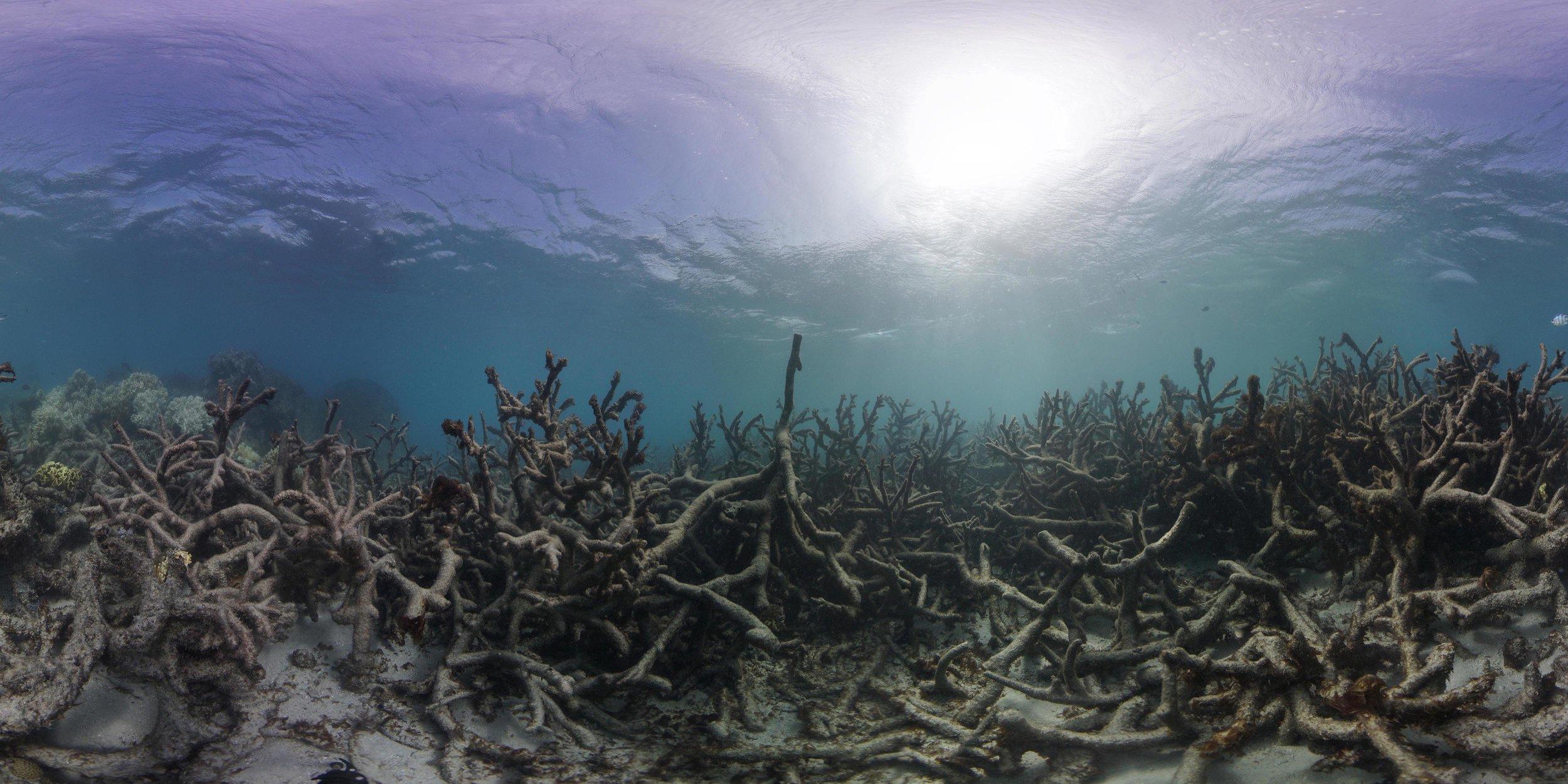 Lizard Island, GBR, may 2016 credit: THE OCEAN AGENCY / XL CATLIN SEAVIEW SURVEY