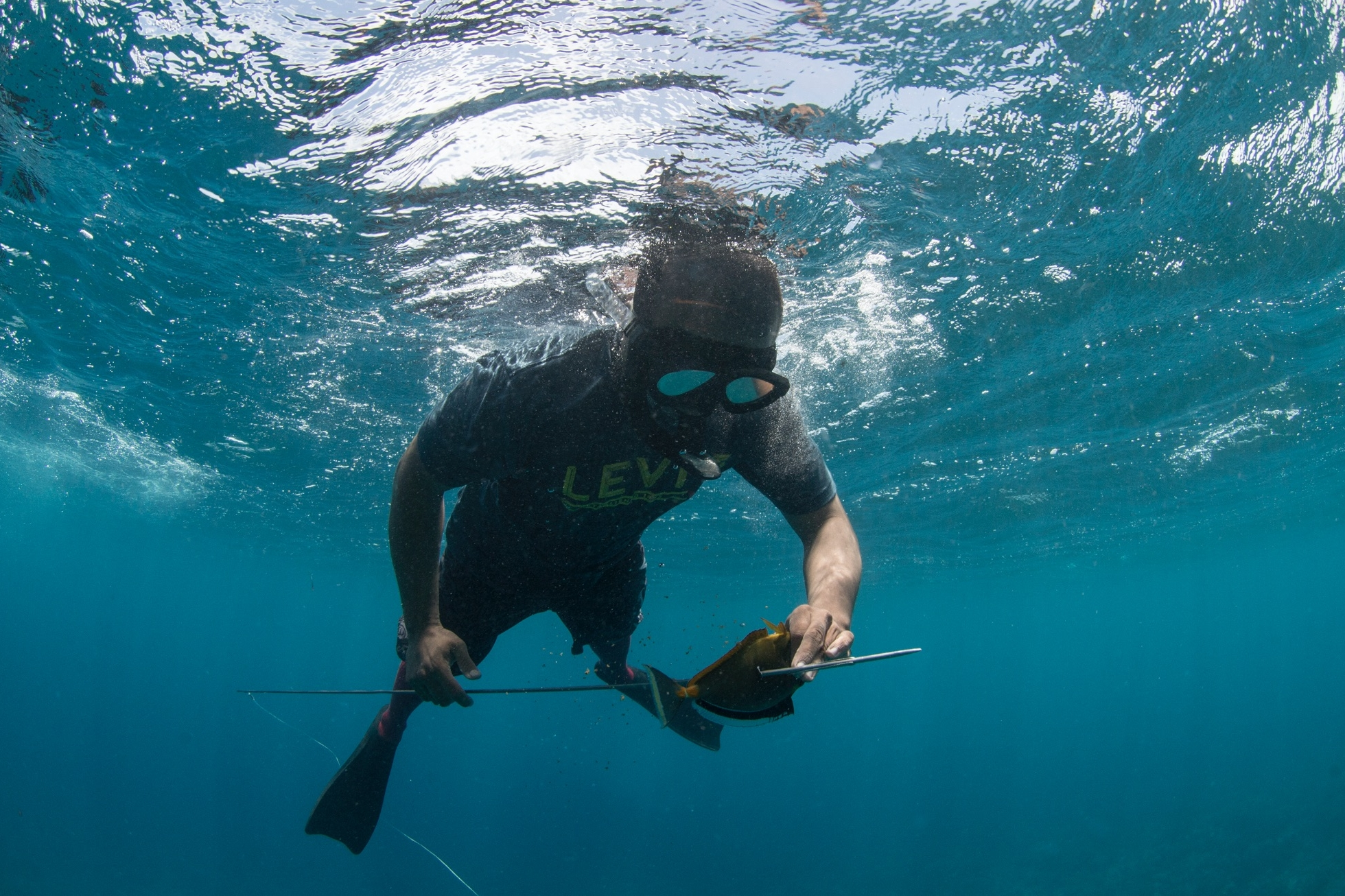 SPEARFISHER, PALAU CREDIT: THE OCEAN AGENCY / coral reef image bank