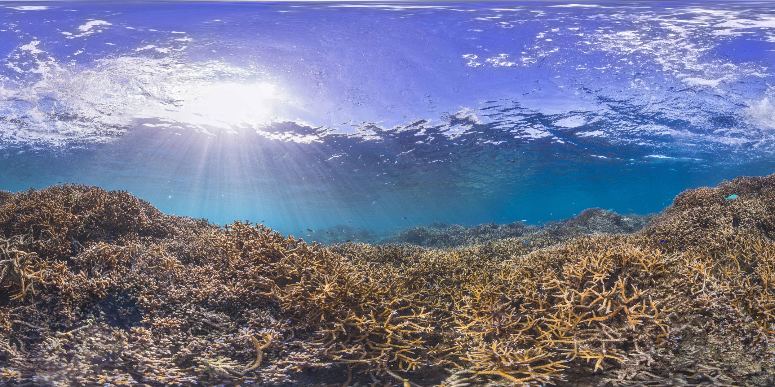 American samoa, dec 2014 credit: THE OCEAN AGENCY / XL CATLIN SEAVIEW SURVEY