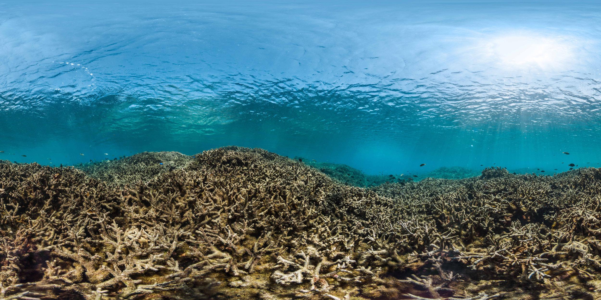 american samoa, aug 2015 credit: THE OCEAN AGENCY / XL CATLIN SEAVIEW SURVEY