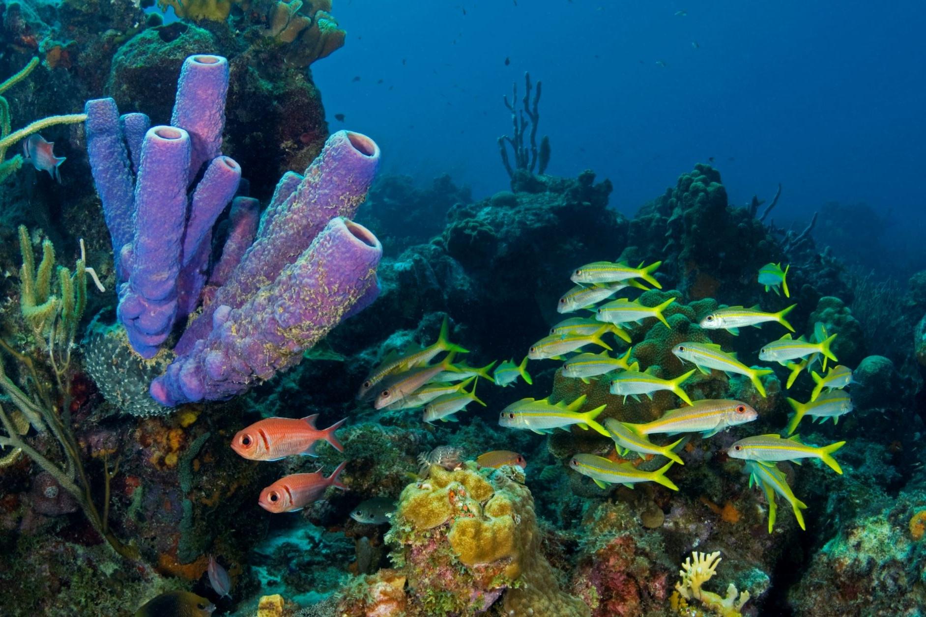 the maldives, may 2016 CREDIT: the ocean agency/ coral reef image bank