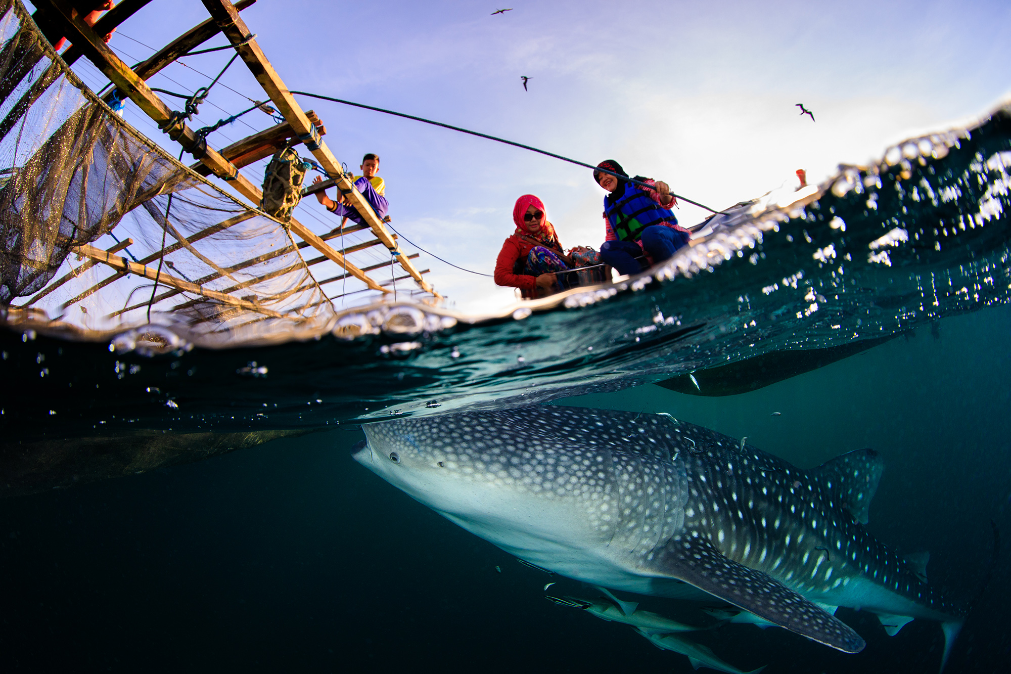 LOCALS WITH WHALE SHARK, Derawan, Indonesia CREDIT: YEN-YI LEE / coral reef image bank