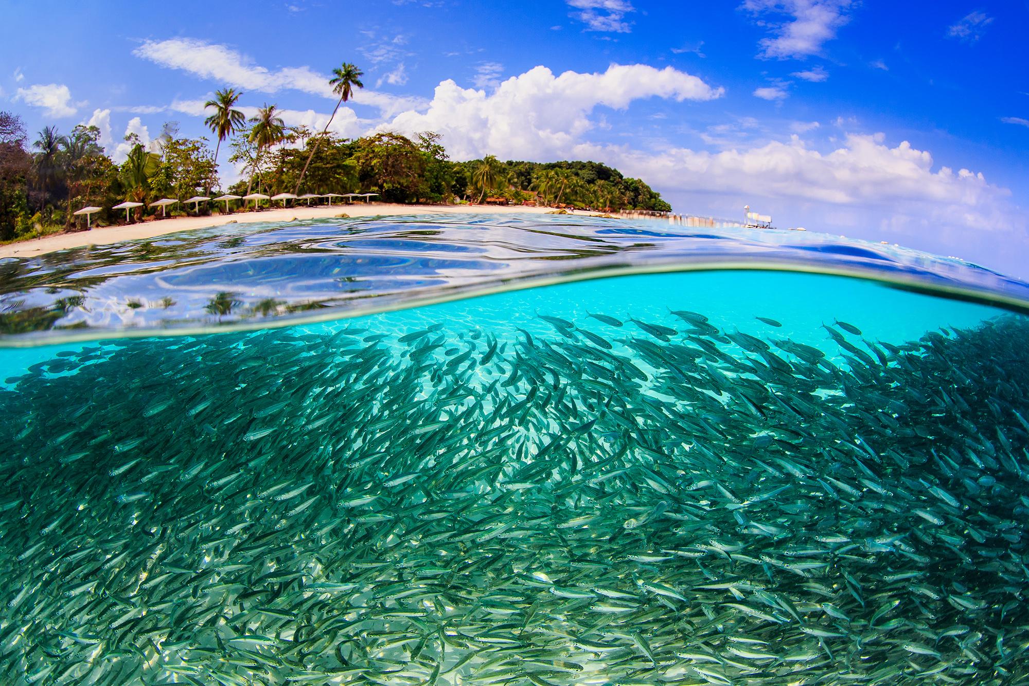 A SCHOOL IN LANG TENGAH ISLAND, MALAYSIA CREDIT: YEN-Yi LEE / coral reef image bank