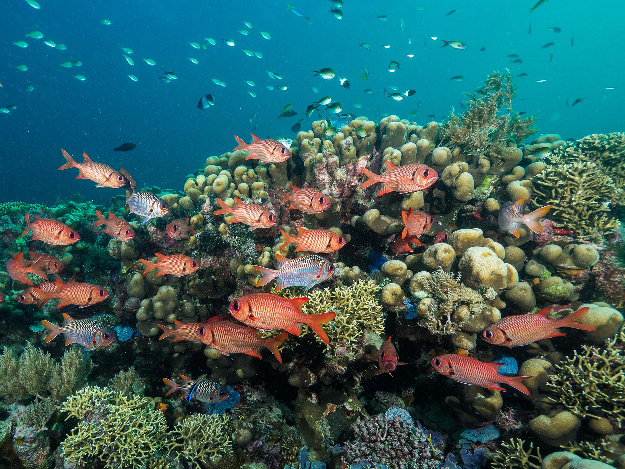 Mafia Island Marine Park, Tanzania CREDIT: SIMON J. PIERCE / coral reef image bank