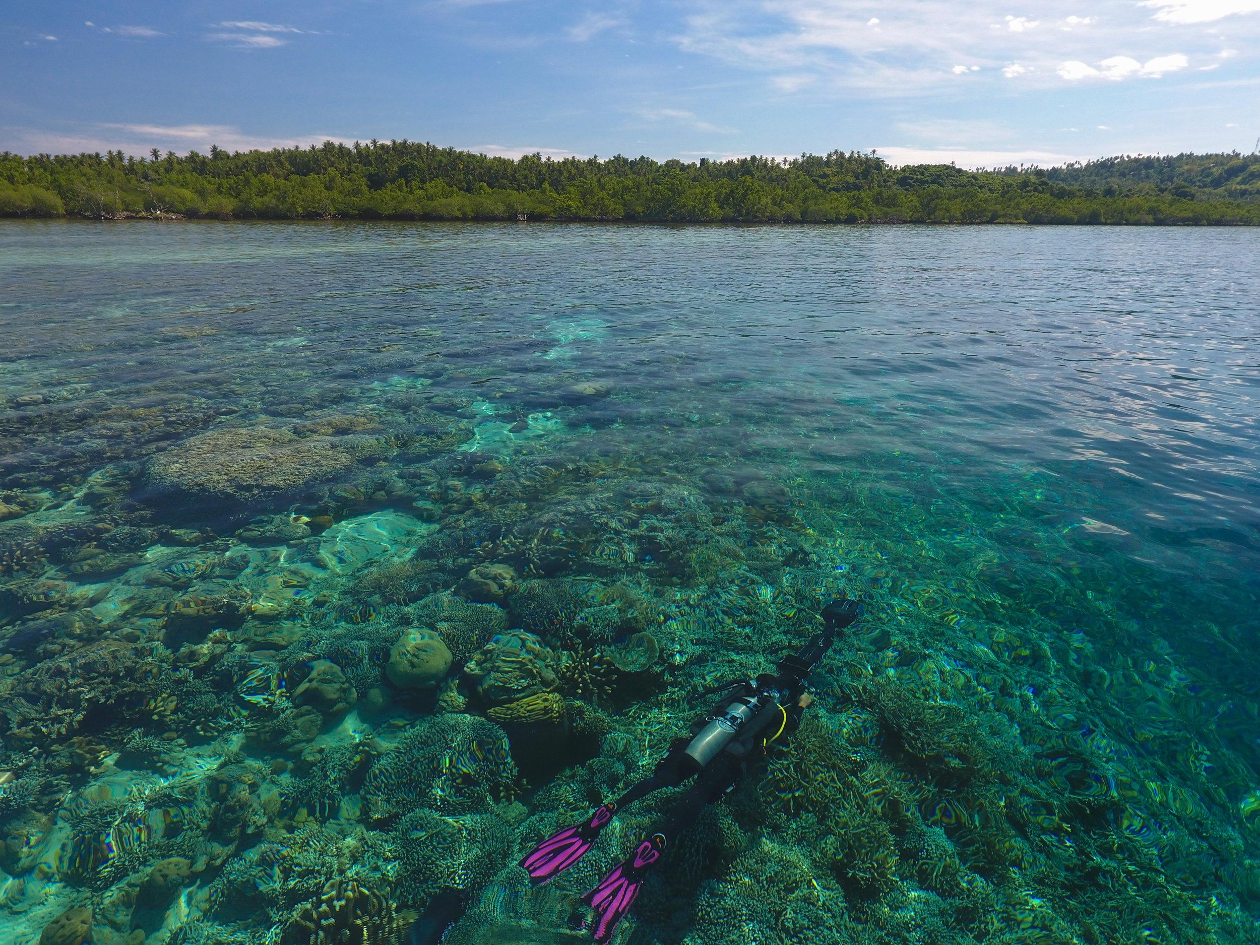 06 - scientific divers conduct a survey in BUnaken CREDIT: The Ocean Agency / paul g. allen philanthropies