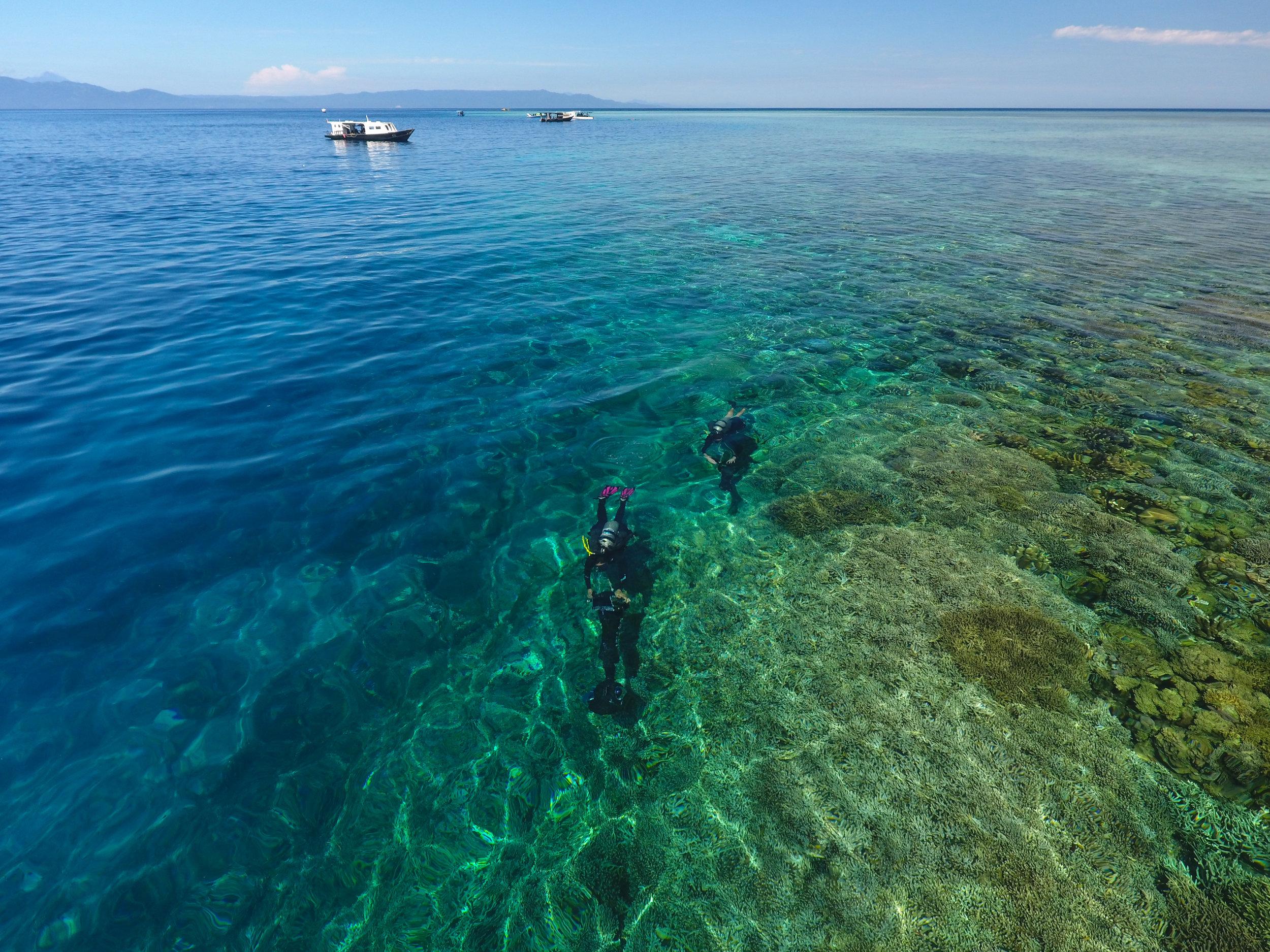 09 - divers seen from above the water CREDIT: The Ocean Agency / paul g. allen philanthropies
