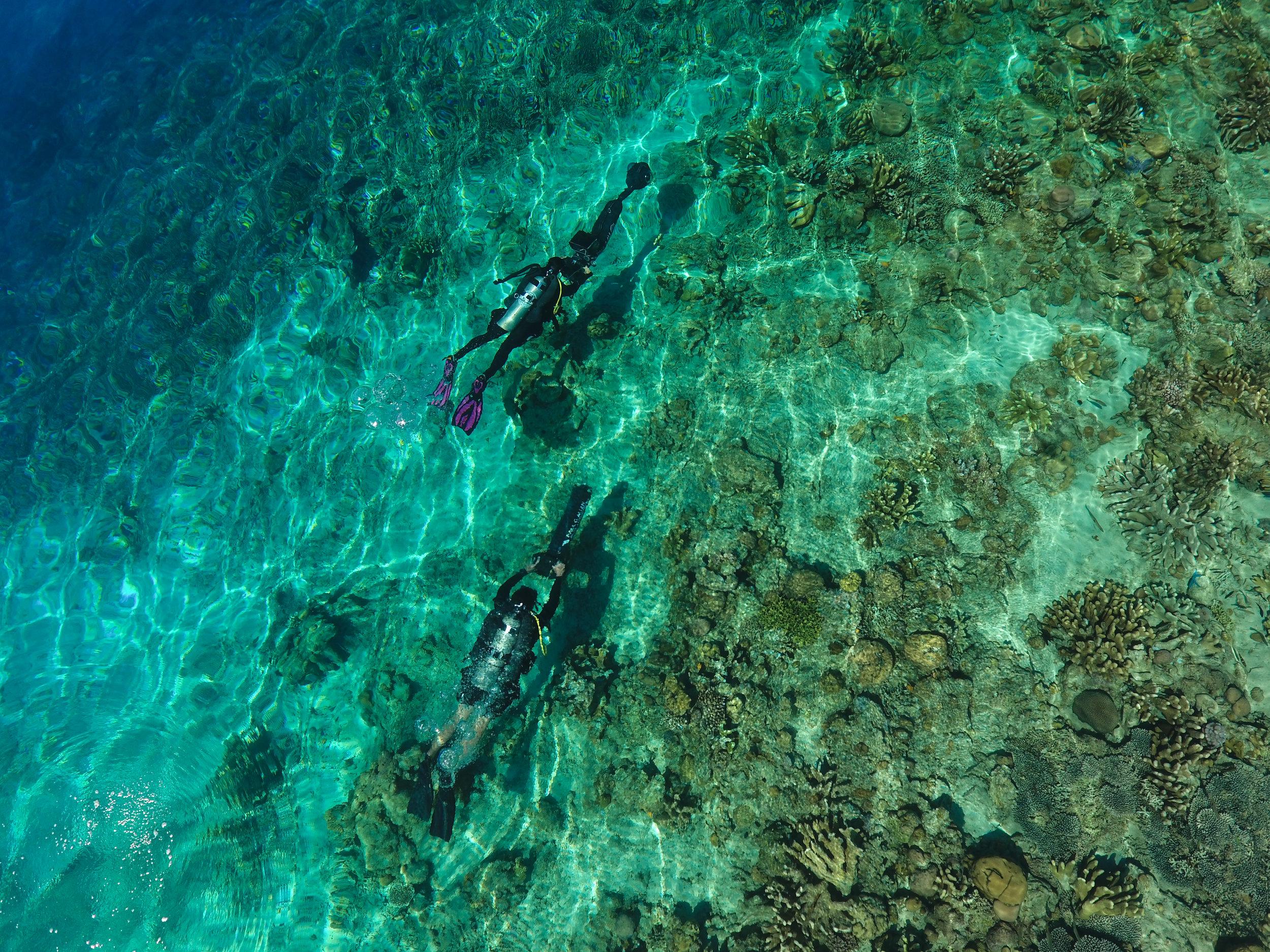 04 - scientific divers survey a coral reef CREDIT: The Ocean Agency / paul g. allen philanthropies