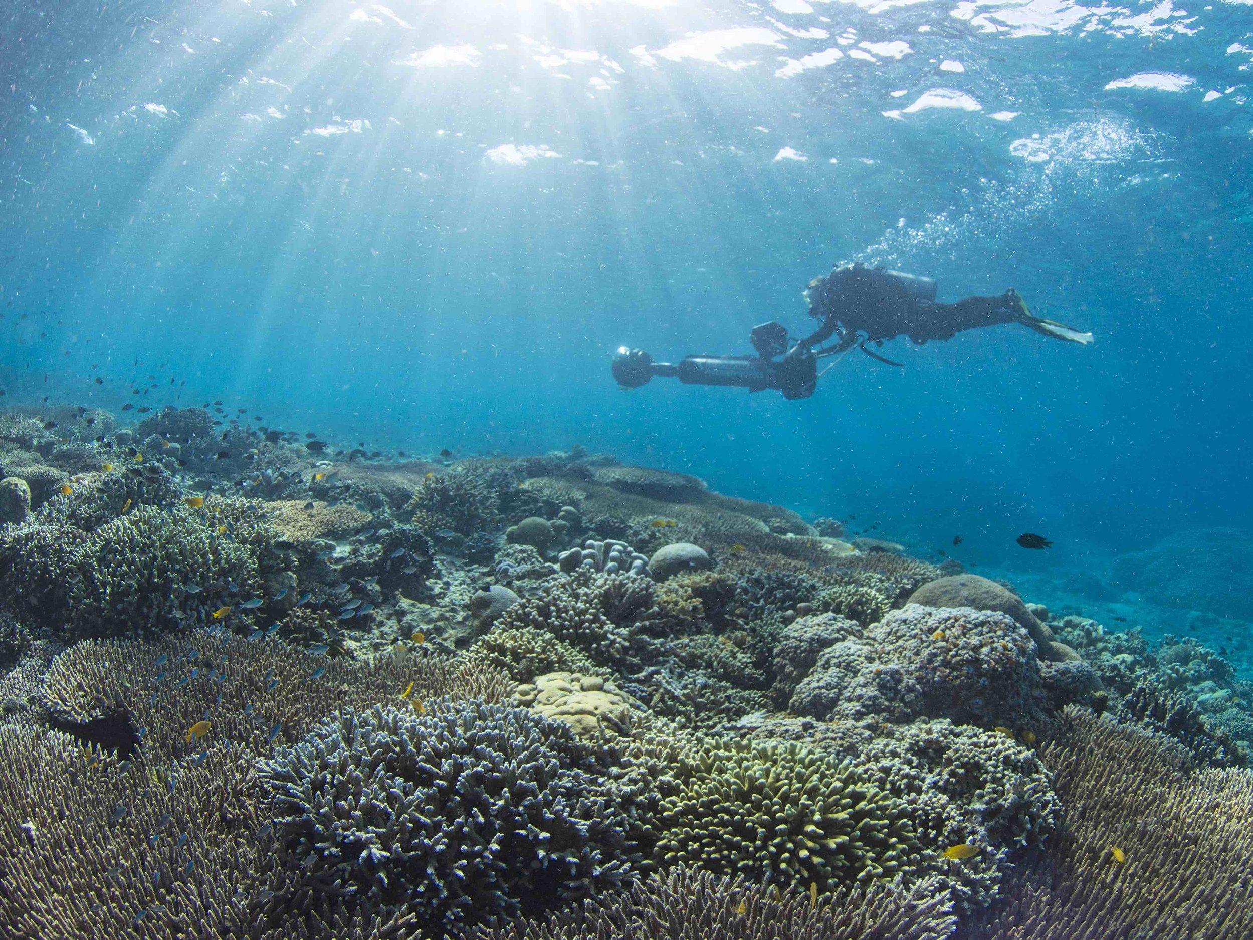 11 - A surveyor captures footage of the corals CREDIT: The Ocean Agency / paul g. allen philanthropies