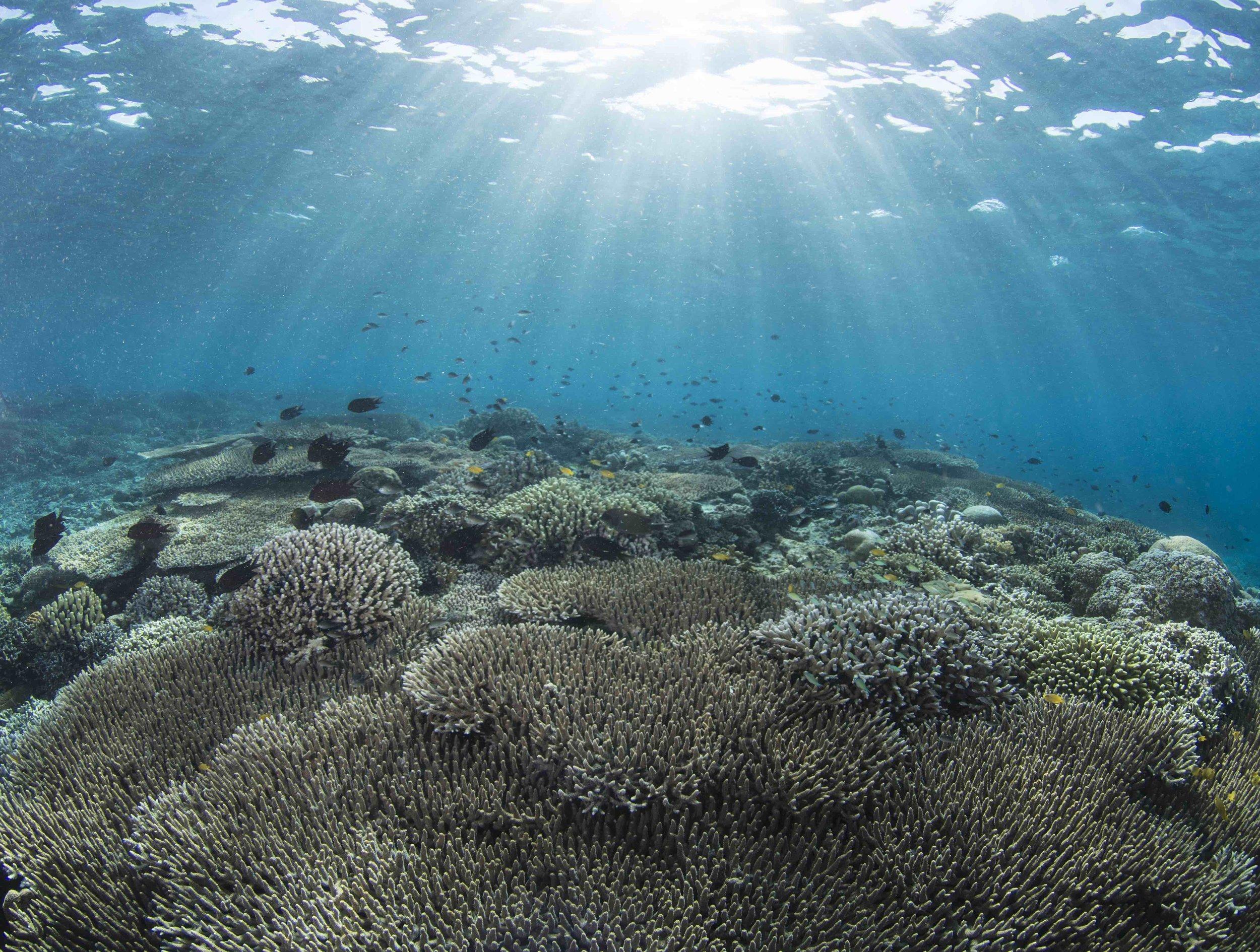 14 - coral Reefs in Manado are surprisingly healthy CREDIT: The Ocean Agency / paul g. allen philanthropies