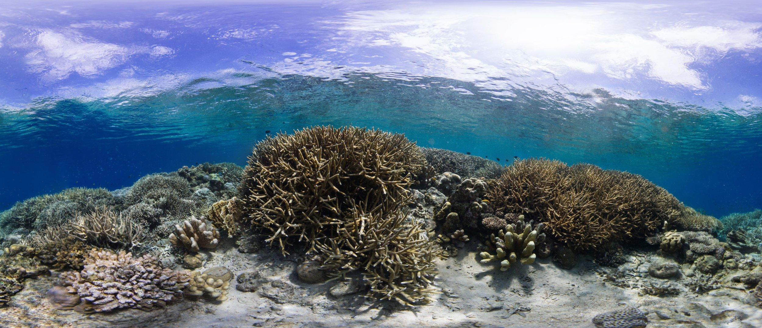 21 - a HEALTHY coral reef in manado, indonesia Credit: The ocean agency / paul g. allen philanthropies
