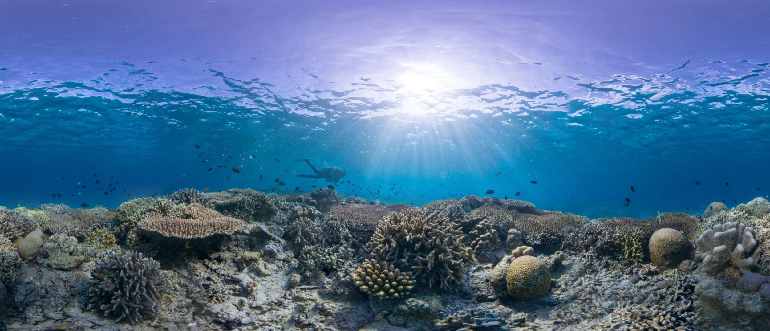 22- a healthy coral reef in manado, indonesia Credit: The ocean agency / paul g. allen philanthropies