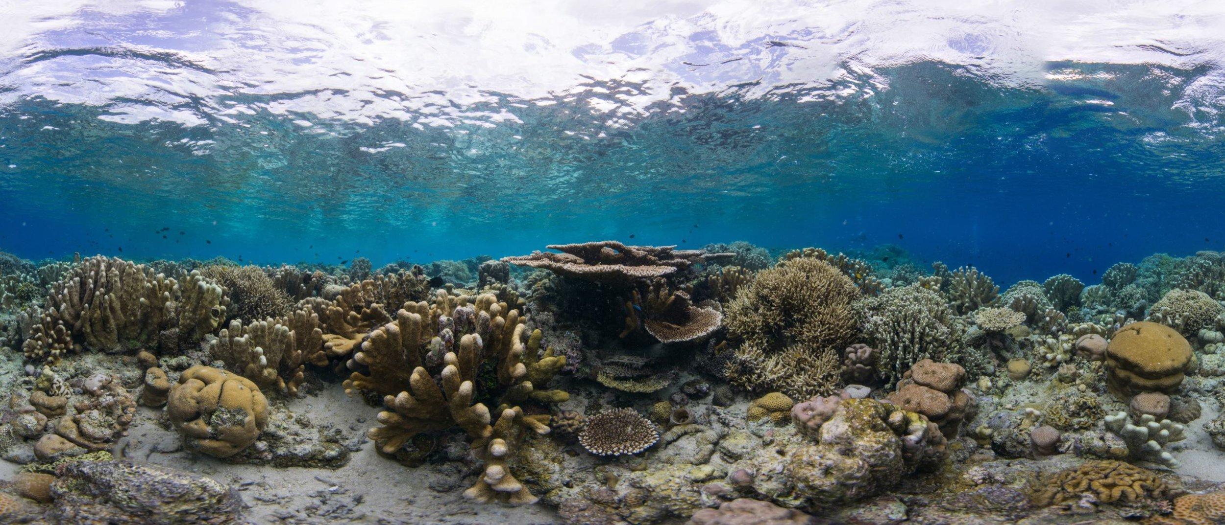 24- a HEALTHY coral reef in manado, indonesia Credit: The ocean agency / paul g. allen philanthropies