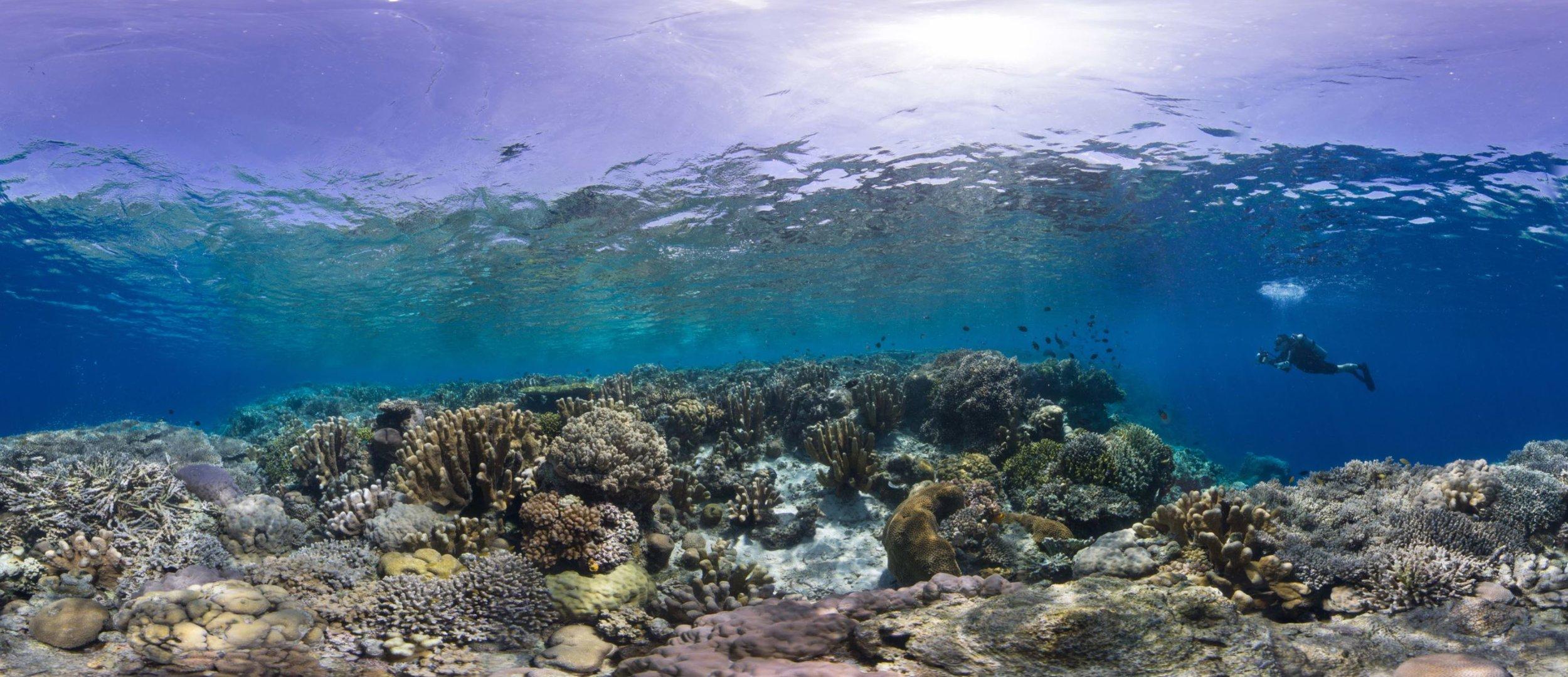 25- a HEALTHY coral reef in manado, indonesia Credit: The ocean agency / paul g. allen philanthropies