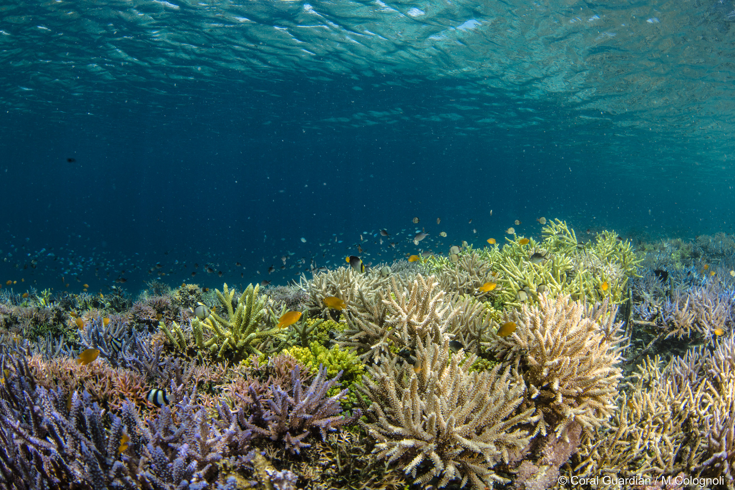 12 - The community's reefs are now thriving CrEDIT: MArtin COLOGNOLI