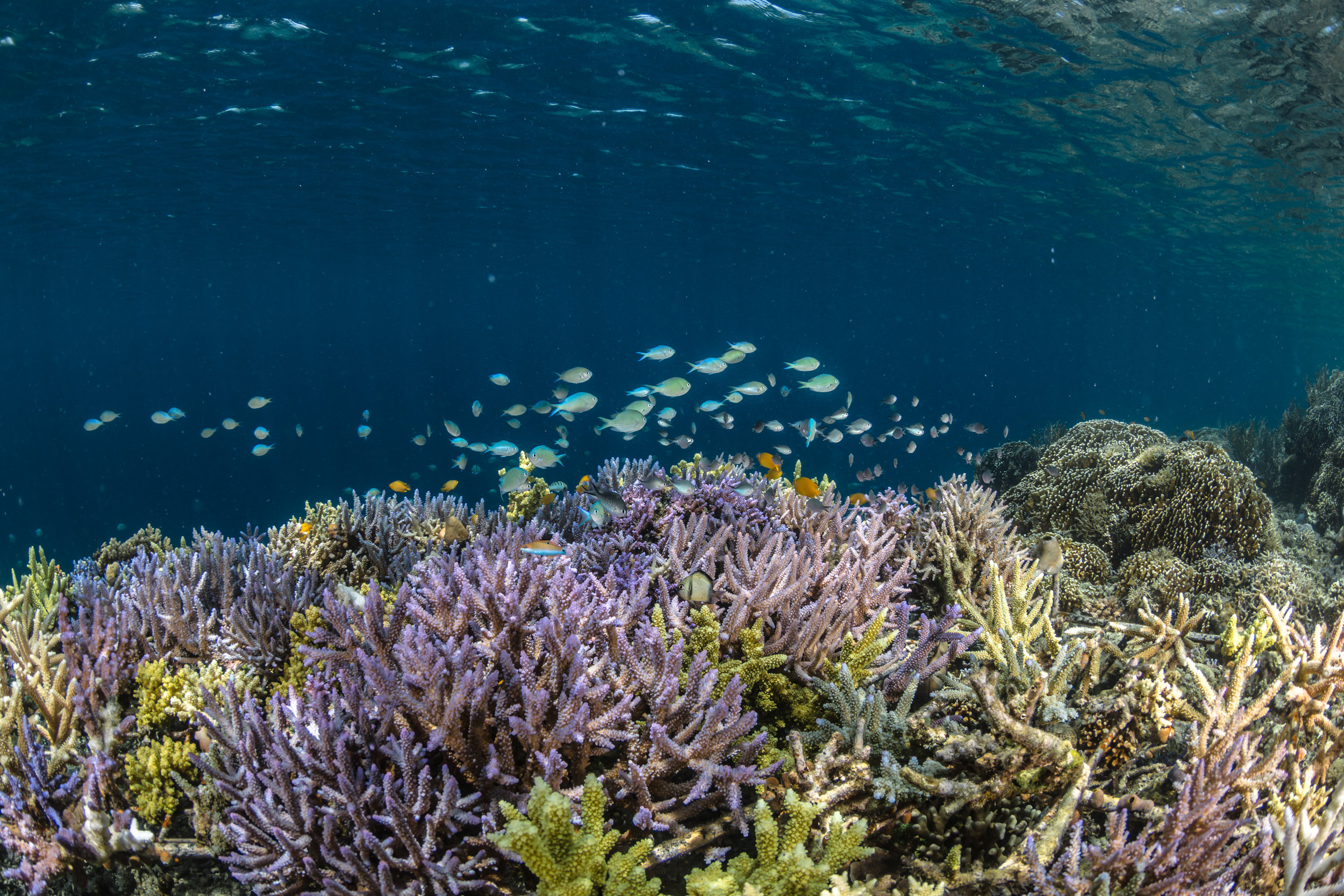 14 - Fish life is attracted to the coral CREDIT: MArtin COLOGNOLI