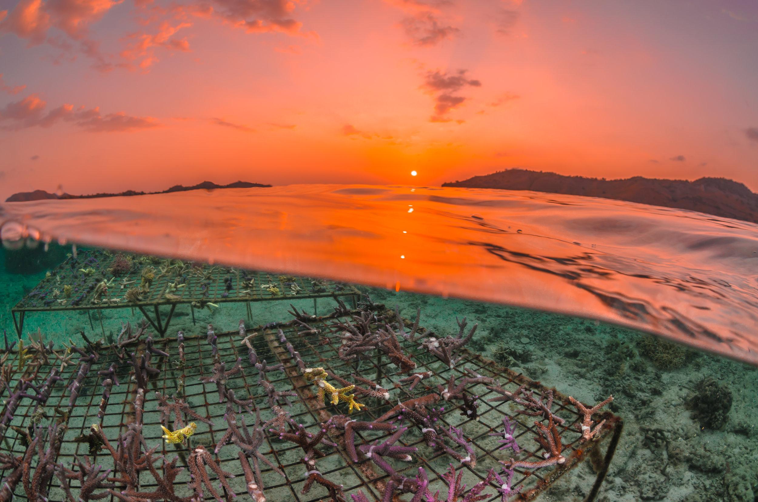 19 - The sun sets over Coral Guardian's nurseries CREDIT: MArtin COLOGNOLI