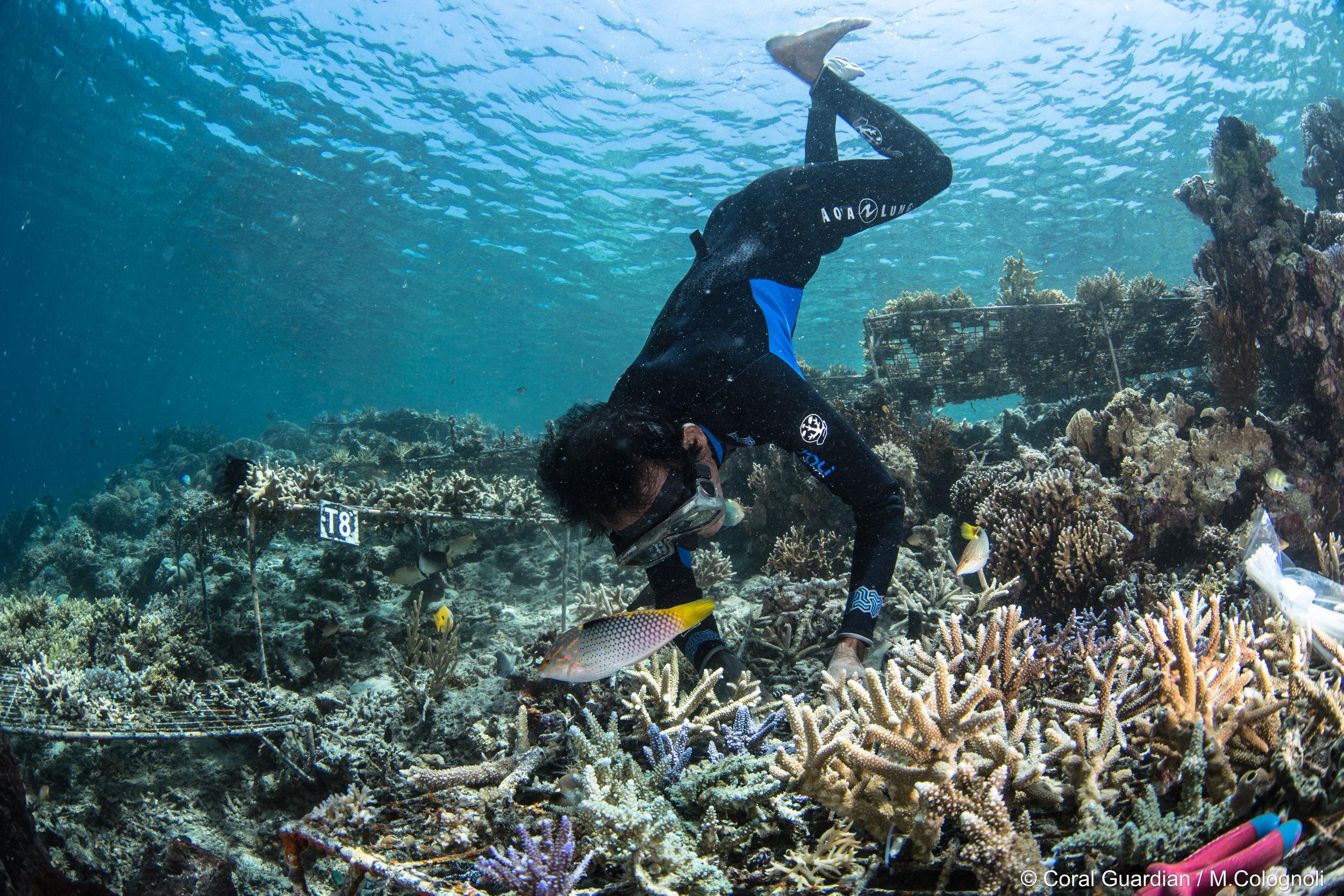 04 - A former fisherman plants corals CREDIT: MArtin COLOGNOLI
