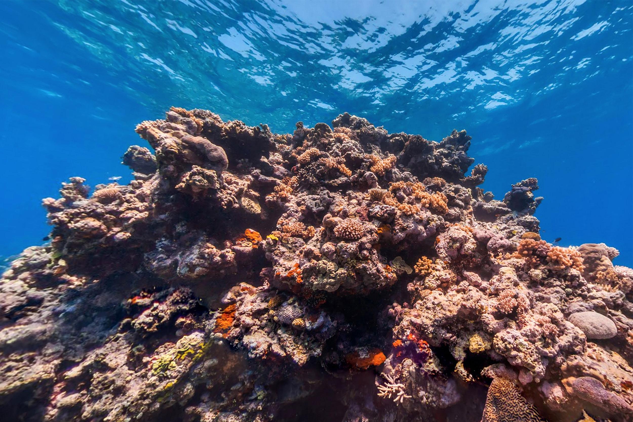 KNIFE REEF, Great barrier reef CREDIT: THE OCEAN AGENCY / XL CATLIN SEAVIEW SURVEY