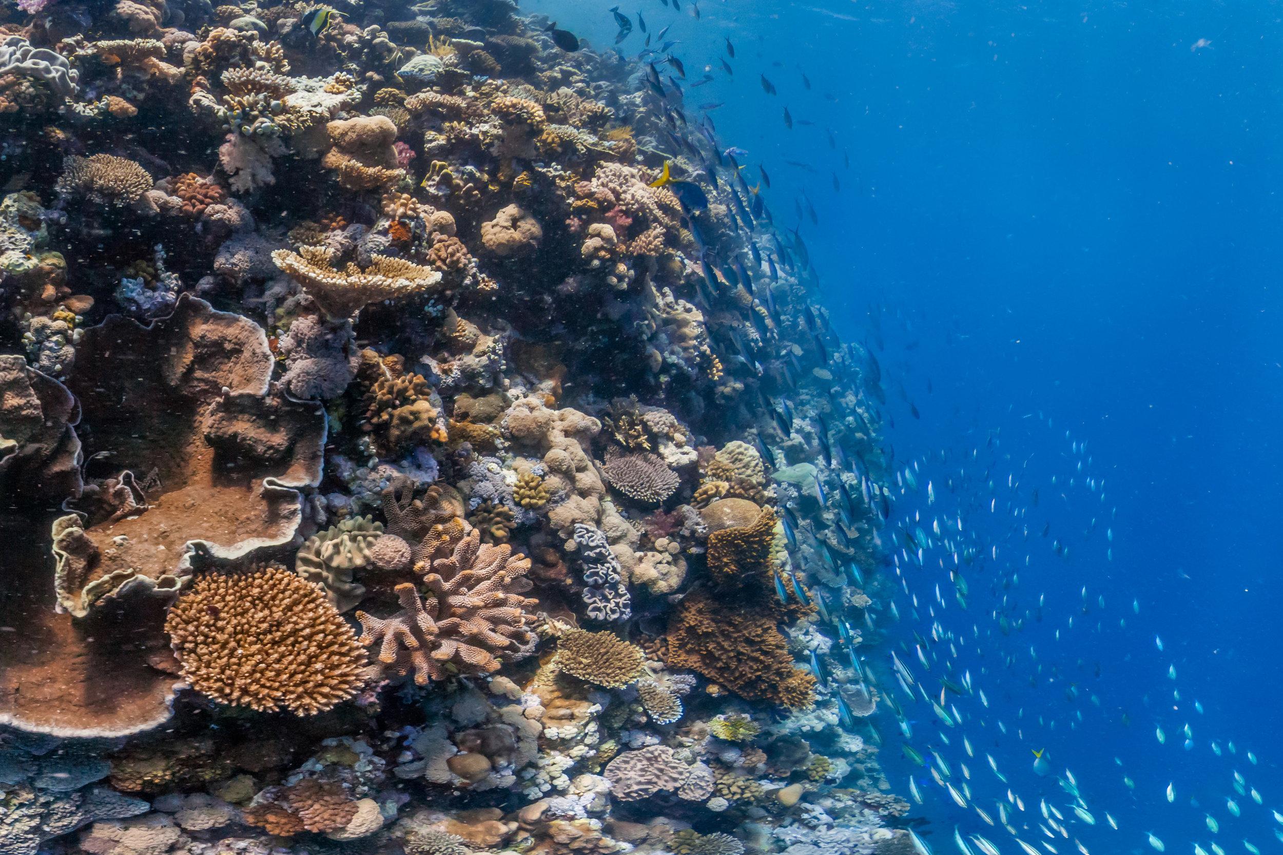 NORTH BROKEN PASSAGE, Great barrier reef CREDIT: THE OCEAN AGENCY / XL CATLIN SEAVIEW SURVEY