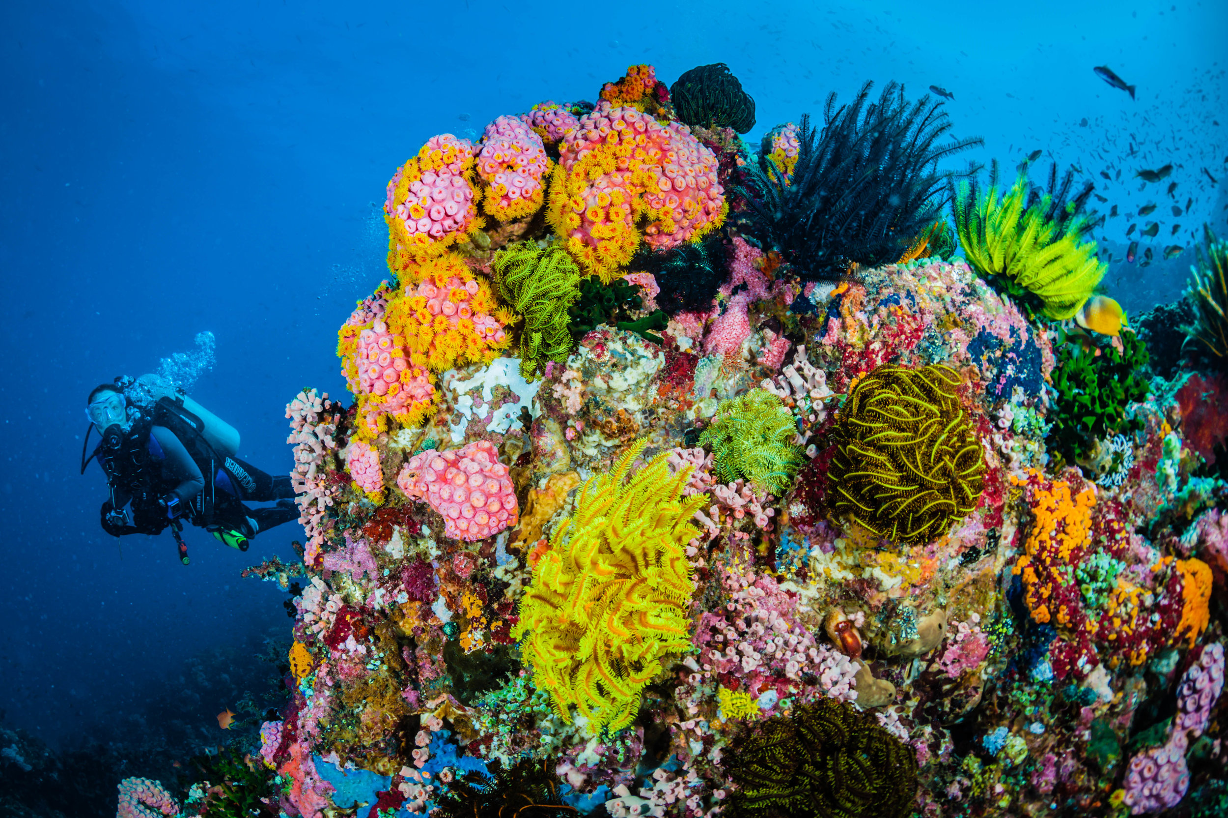 SOMBRERO ISLAND REEF PHILIPPINES CREDIT: JETT BRITNELL / coral reef image bank