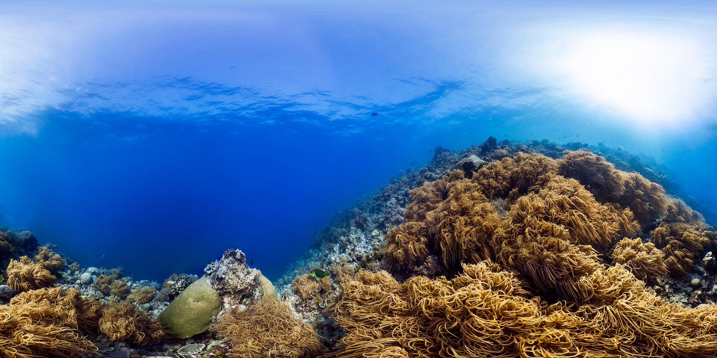 TUBBATAHA REEF, PHILIPPINES CREDIT: THE OCEAN AGENCY / XL CATLIN SEAVIEW SURVEY