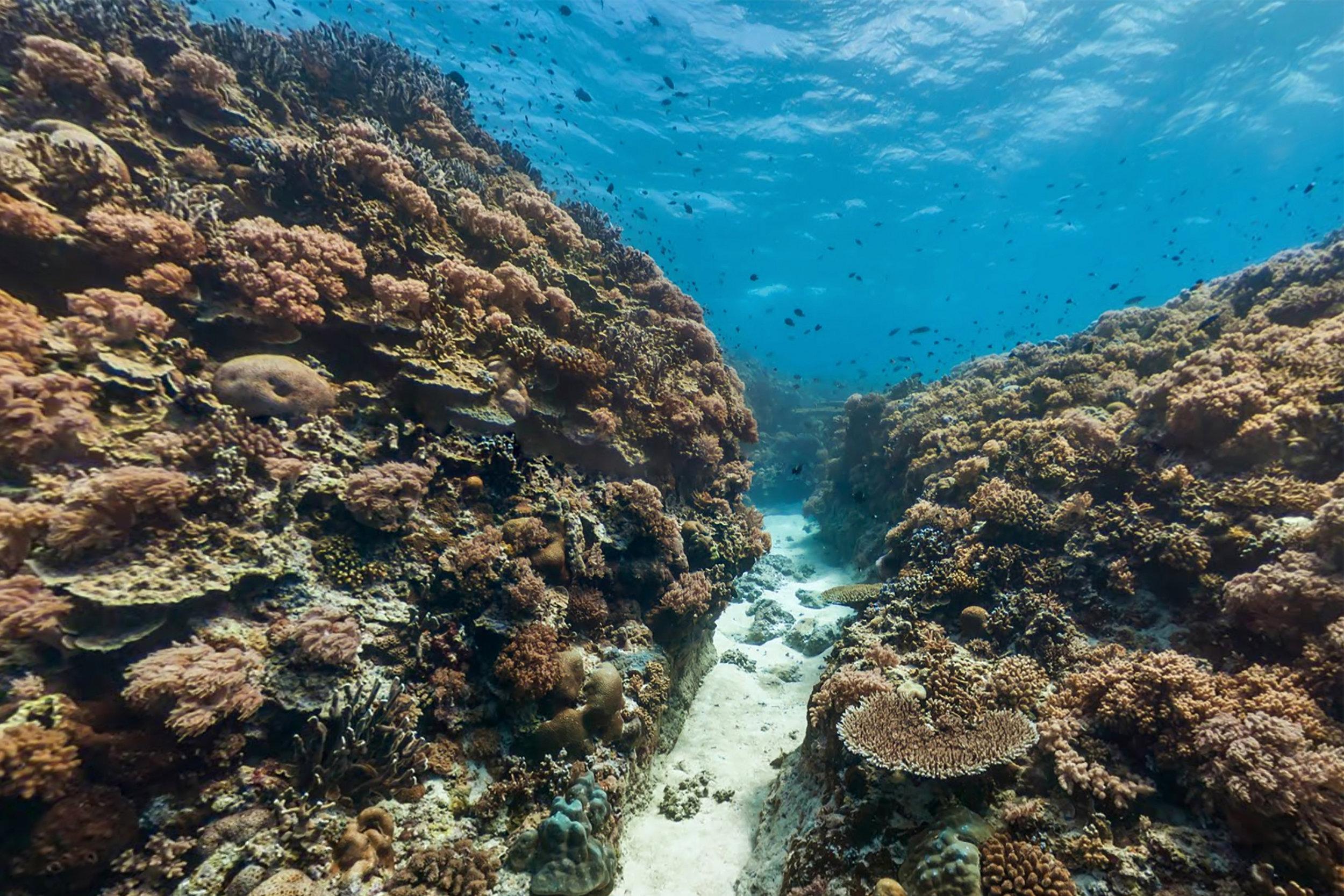 JESSIE BEAZLEY REEF, PHILIPPINES CREDIT: THE OCEAN AGENCY / XL CATLIN SEAVIEW SURVEY