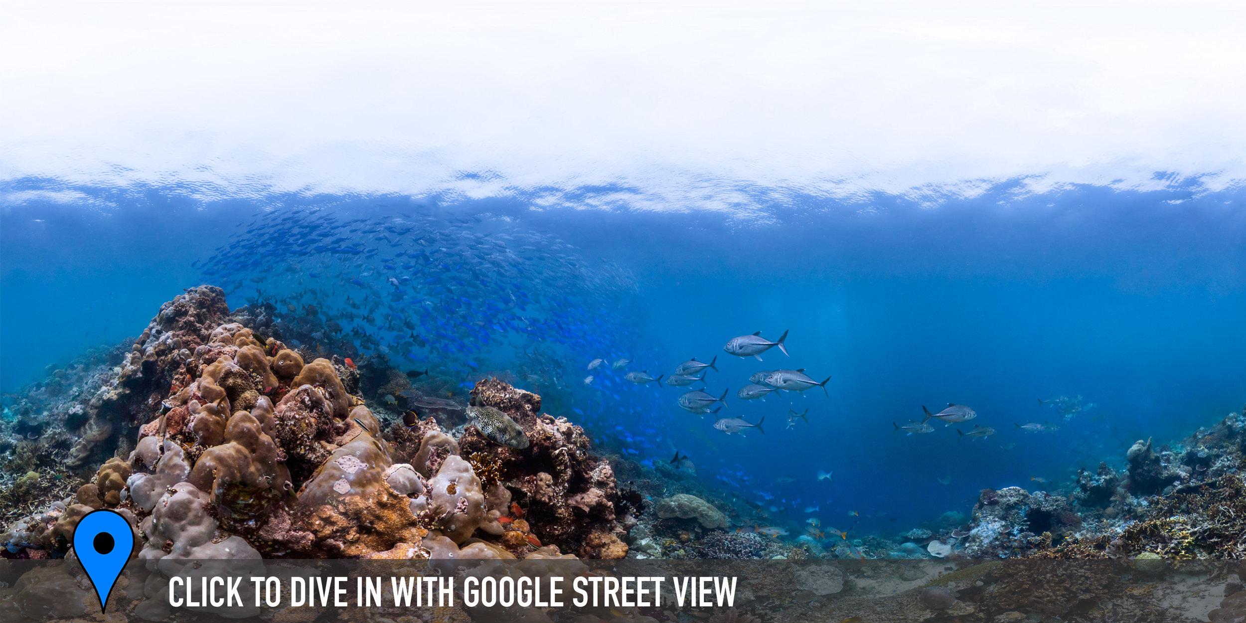 CAPE KRI, INDONESIA CREDIT: THE OCEAN AGENCY / XL CATLIN SEAVIEW SURVEY