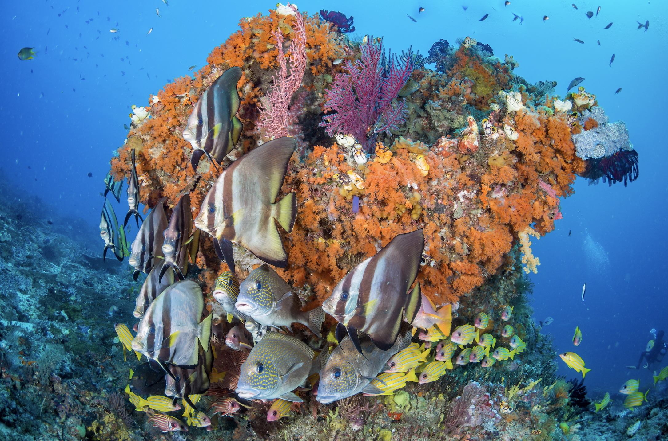 ROCK COVERED IN LIFE credit: grant thomas / CORAL REEF IMAGE BANK