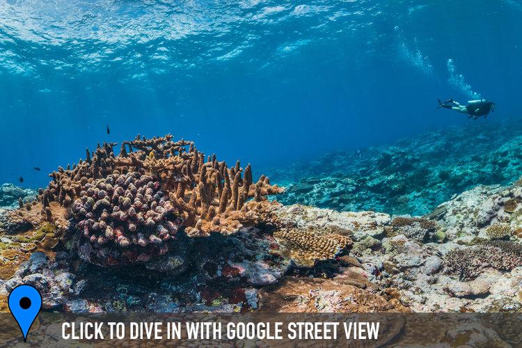 FOGAMA, AMERICAN SAMOA CREDIT: THE OCEAN AGENCY / XL CATLIN SEAVIEW SURVEY