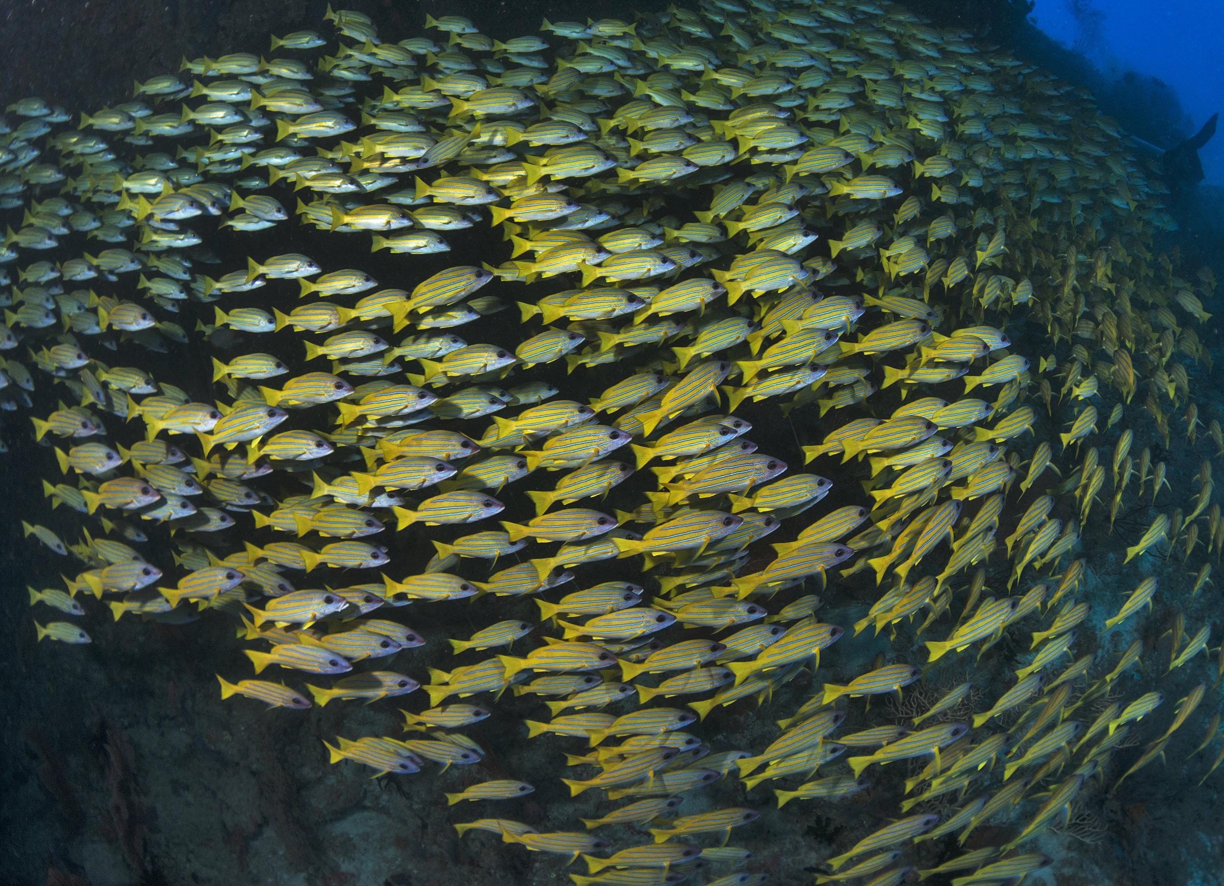 maldives credit: Jayne Jenkins / coral reef image bank