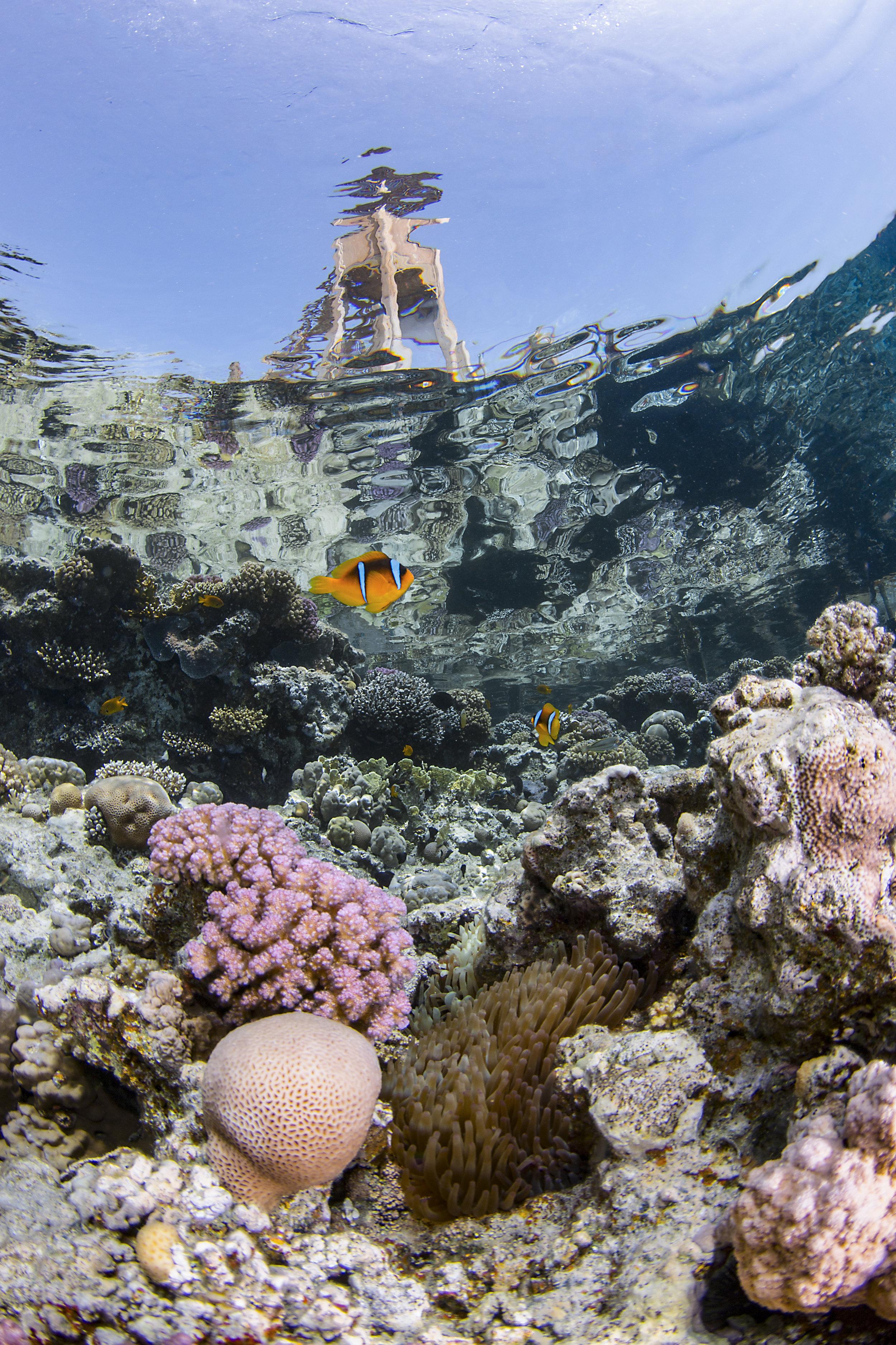 Ras Umm sid, sharmel sheikh credit: Renata romeo / coral reef image bank