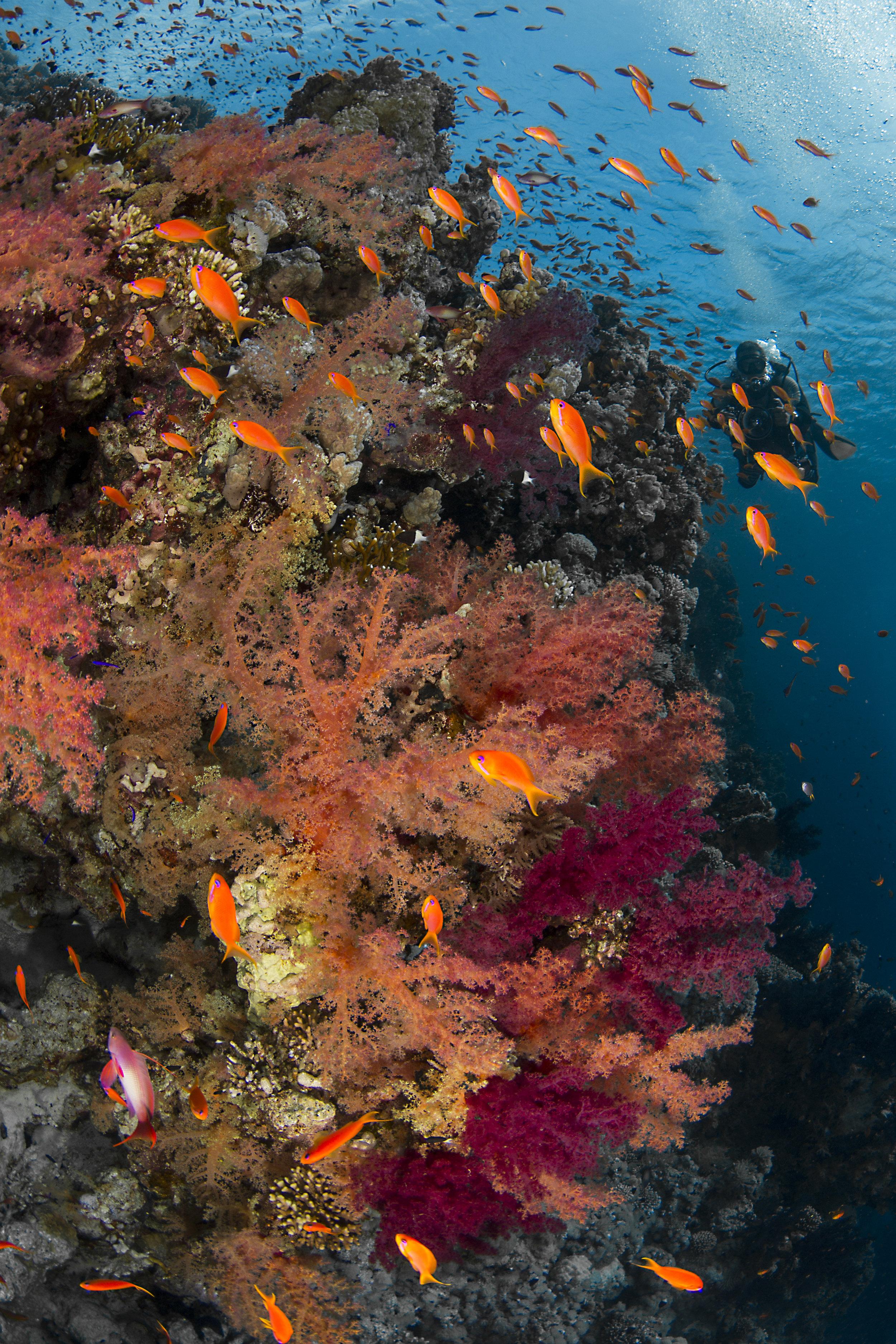 Jackson Reef Tiran Island credit: renata romeo / coral reef image bank