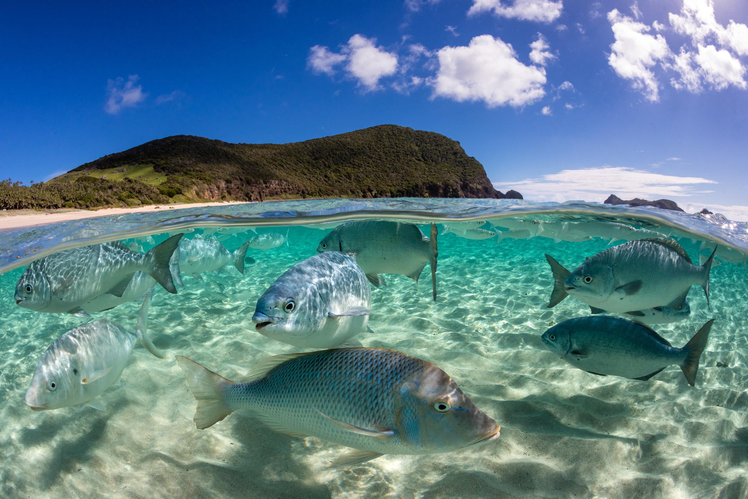 SCHOOL HALF HALF CREDIT: JORDAN ROBINS / coral reef image bank
