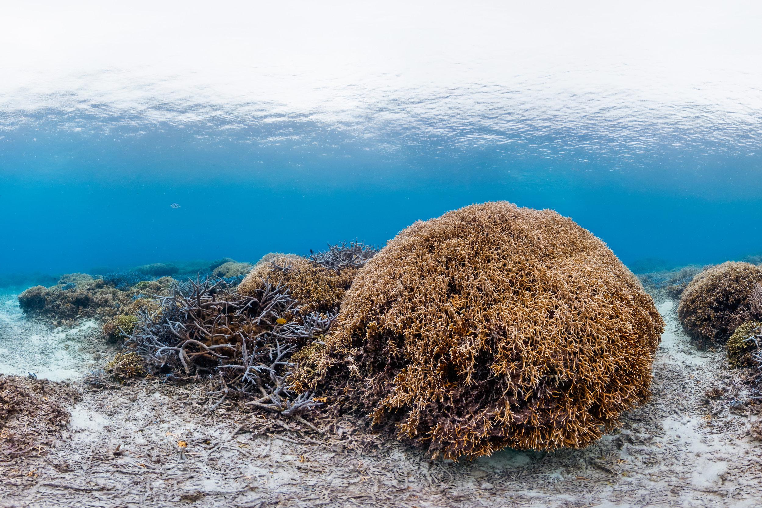 Tokashiki, Okinawa, JAPAN CREDIT: THE OCEAN AGENCY / CORAL REEF IMAGE BANK
