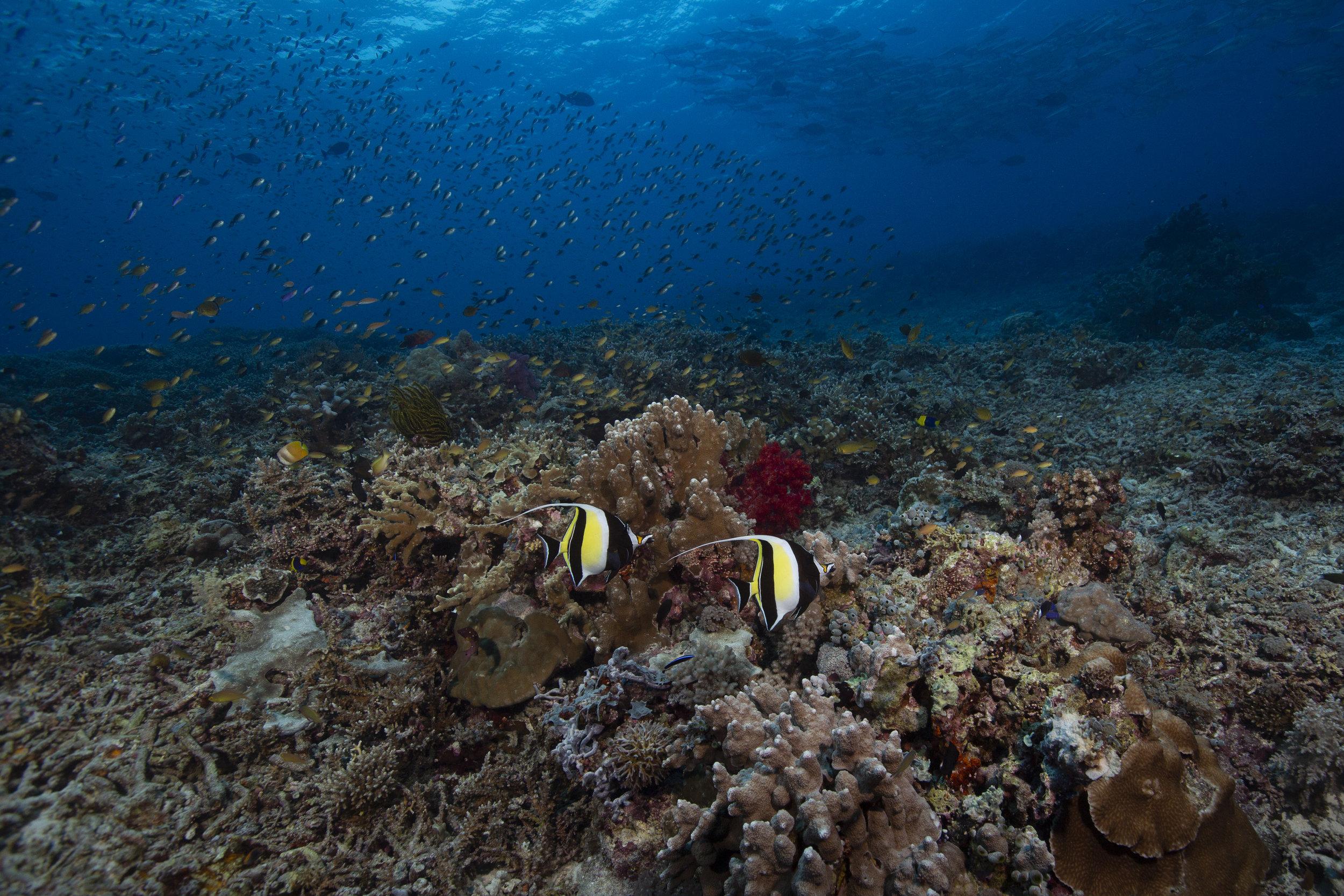 TUBBATAHA, PHILIPPINES CREDIT: RICK MISKIV / coral reef image bank