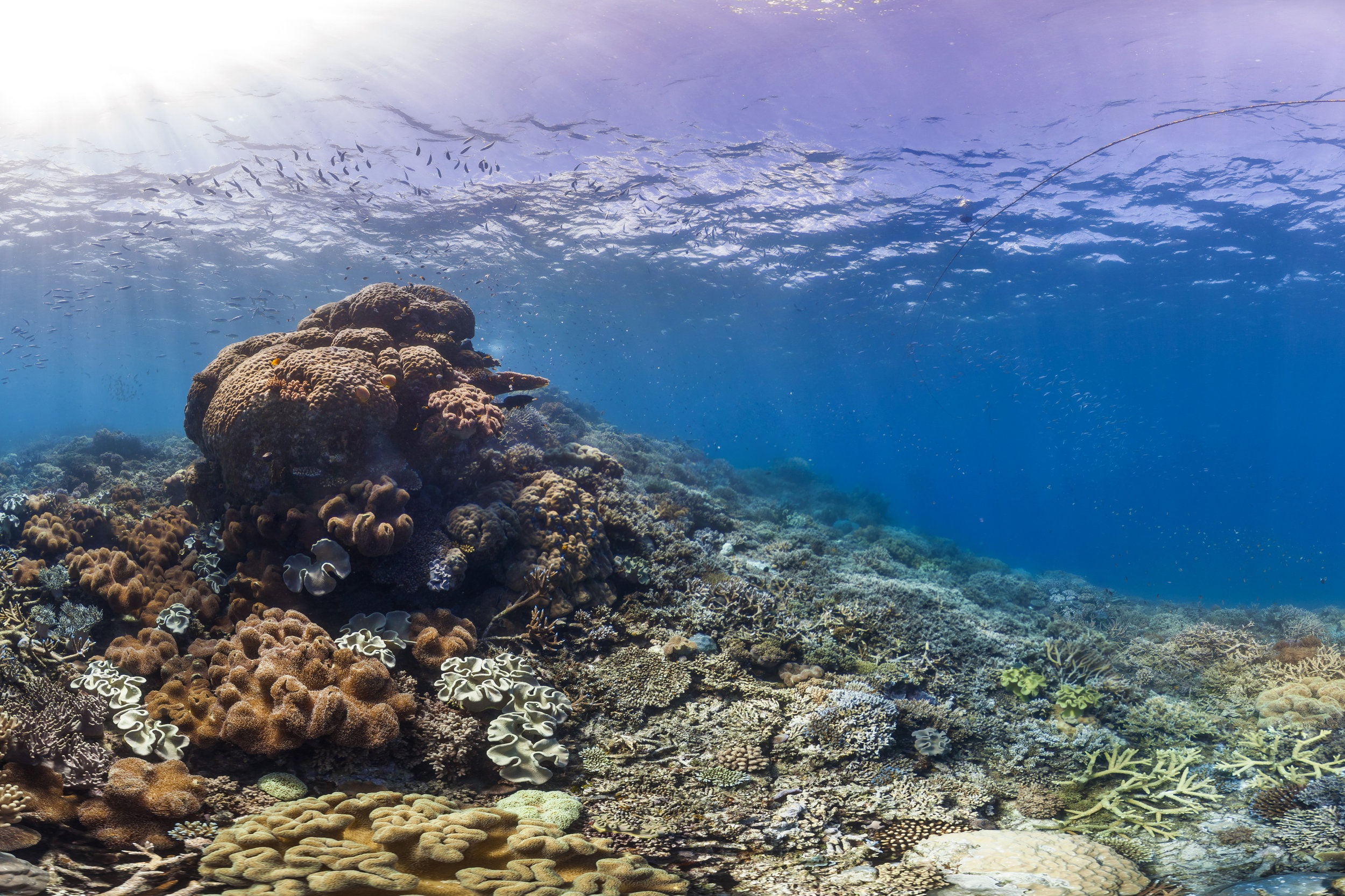 DESTIN REEF, Great barrier reef CREDIT: THE OCEAN AGENCY / XL CATLIN SEAVIEW SURVEY