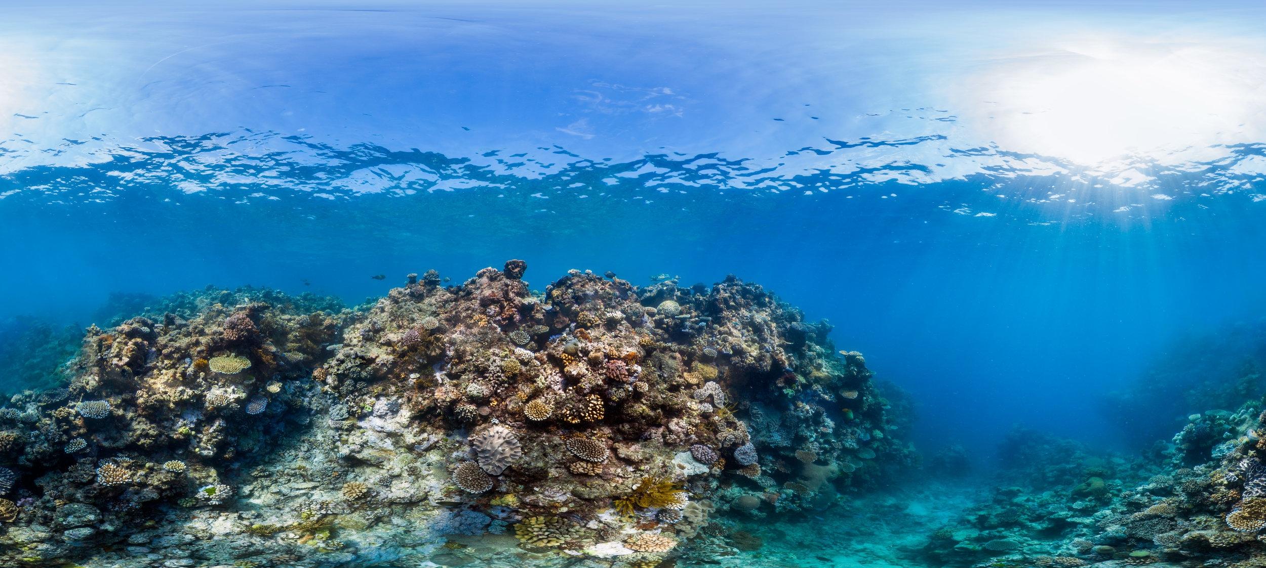 norman REEF CREDIT: THE OCEAN AGENCY / XL CATLIN SEAVIEW SURVEY