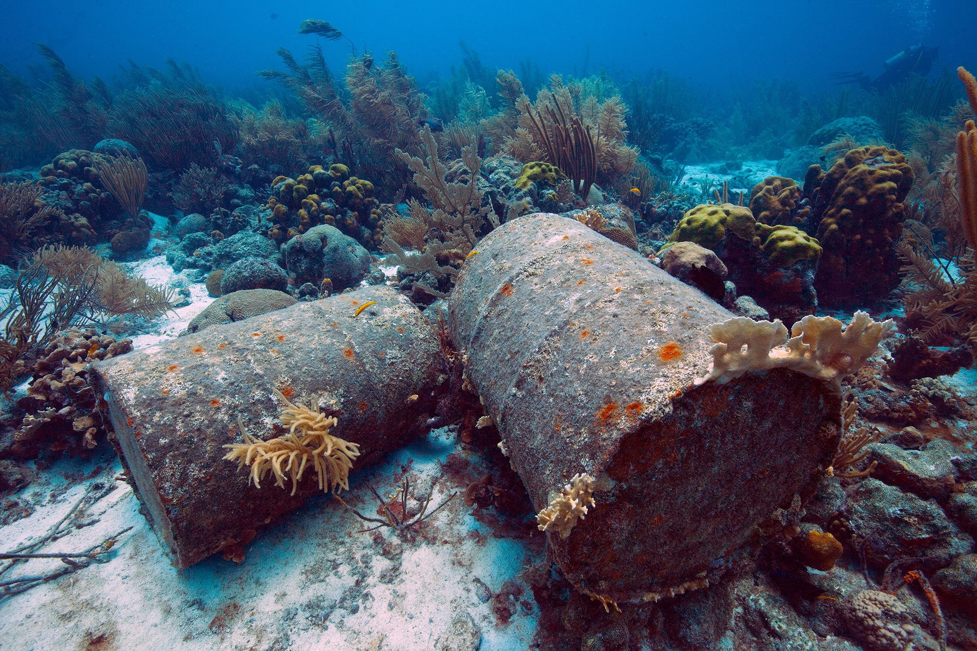 Discarded oil drums litter the bottom in Grenada CREDIT: Jill heinerth / coral reef image bank