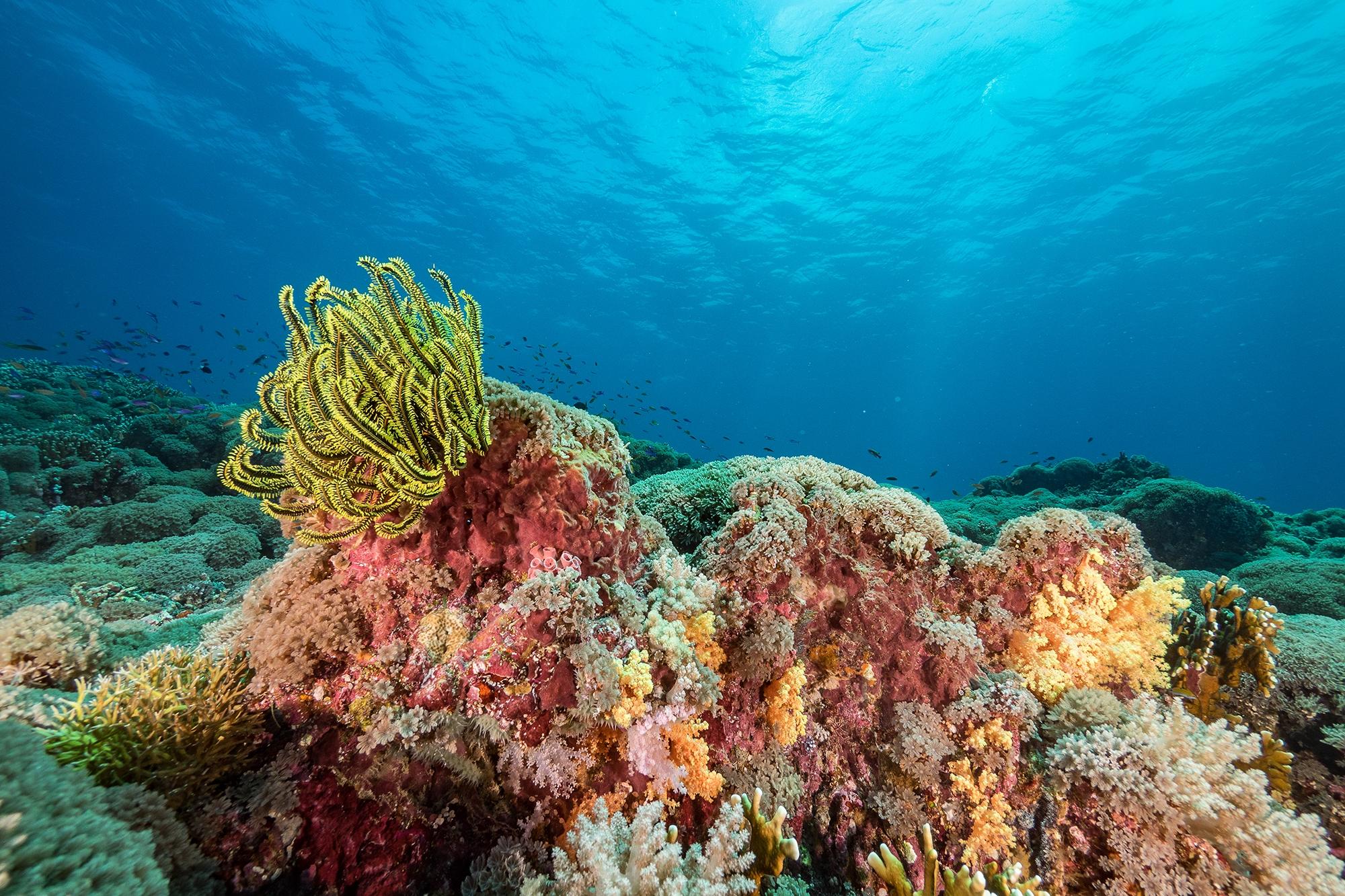 TUBBATAHA REEFS NATURAL PARK, PHILIPPINES CREDIT: SIMON J. PIERCE / coral reef image bank