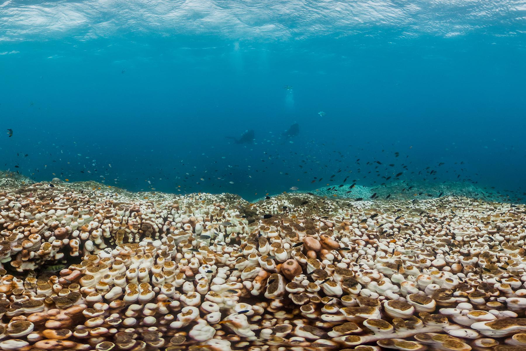 Nagura Bay, okinawa, JAPAN CREDIT: THE OCEAN AGENCY / CORAL REEF IMAGE BANK