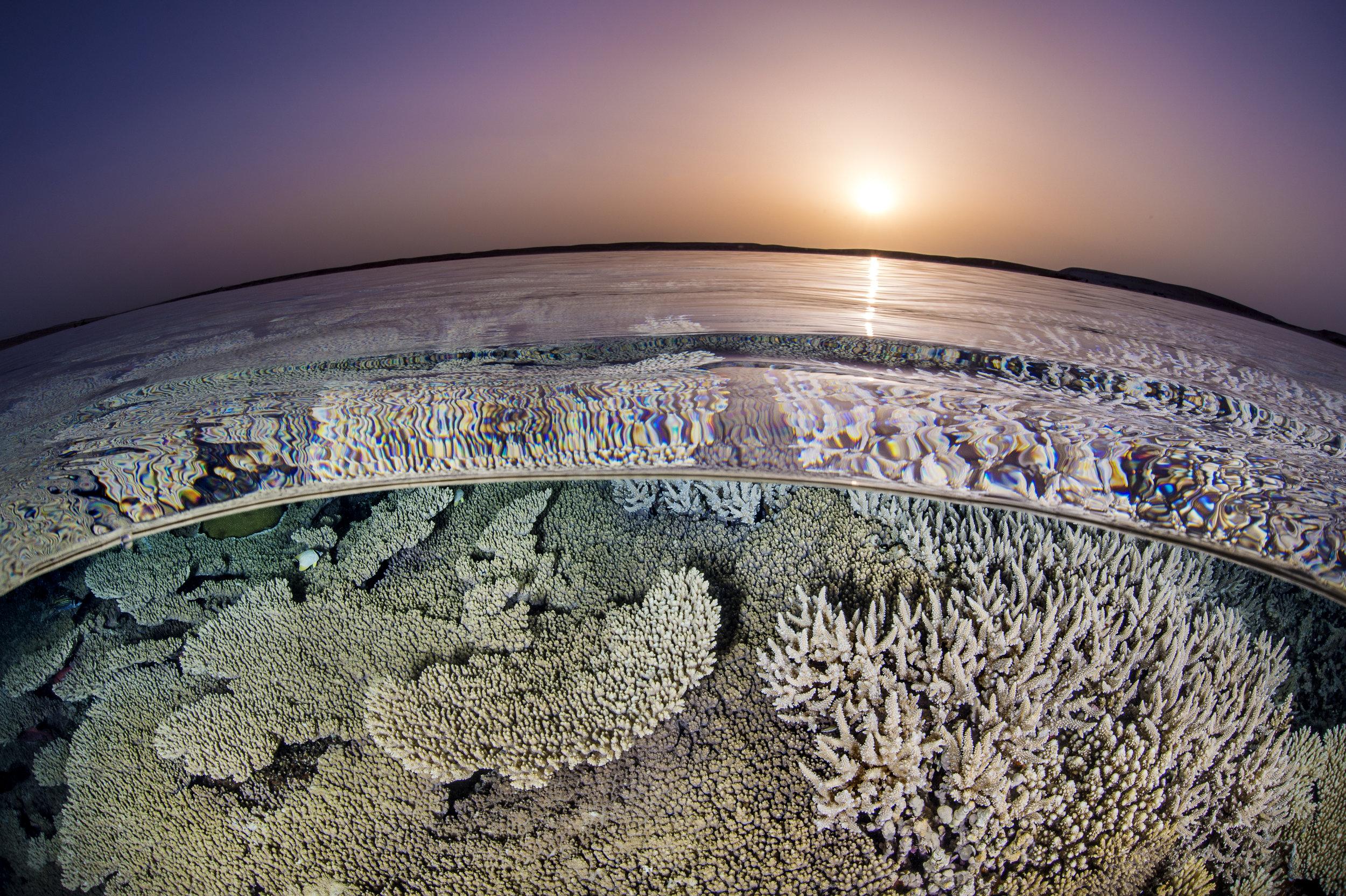 09 - a reef in GUBAL ISLAND, EGYPT credit: alex mustard / coral reef image bank