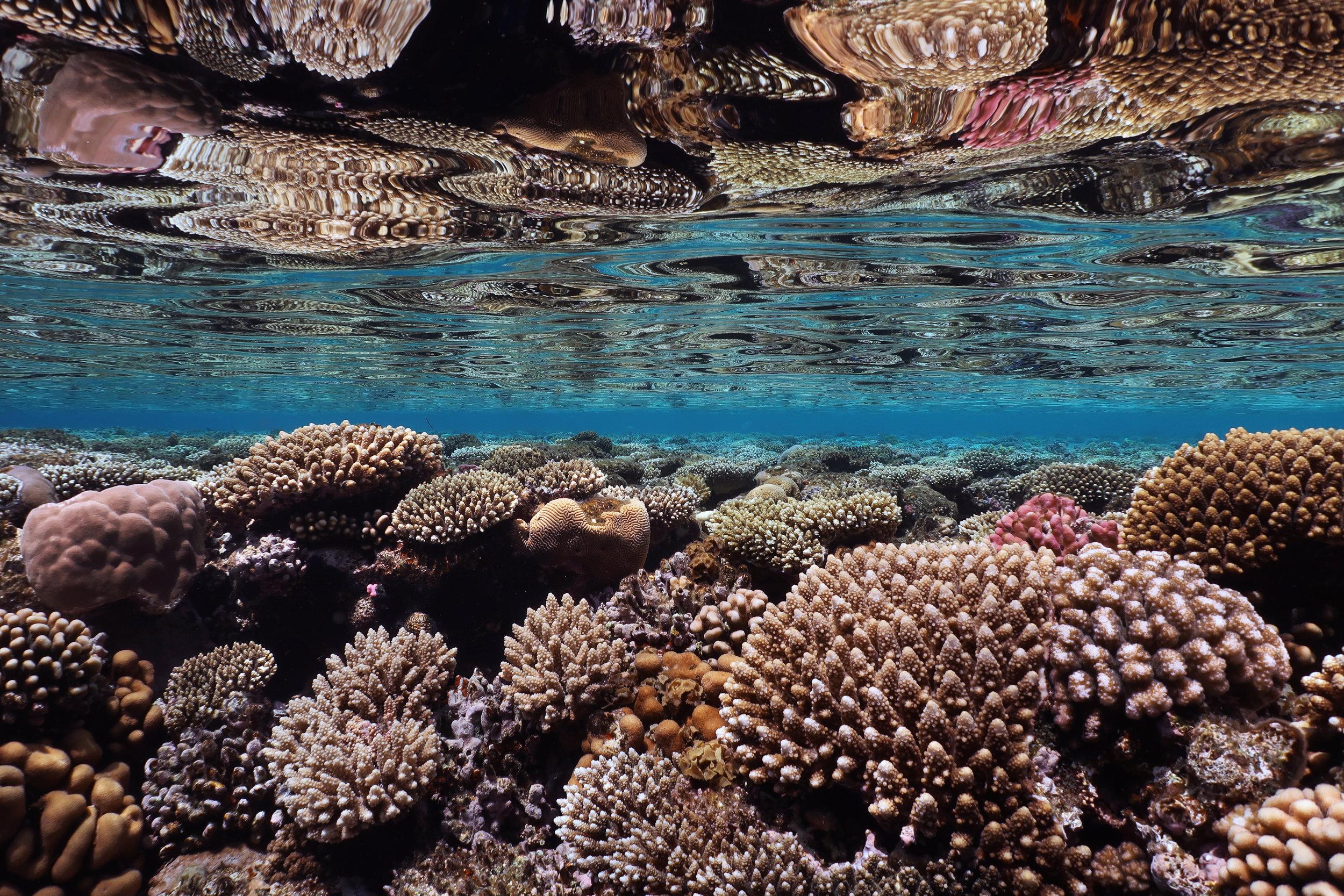 10 - a reef in SHARM-EL-SHEIKH, EGYPT credit: anett szaszi / coral reef image bank