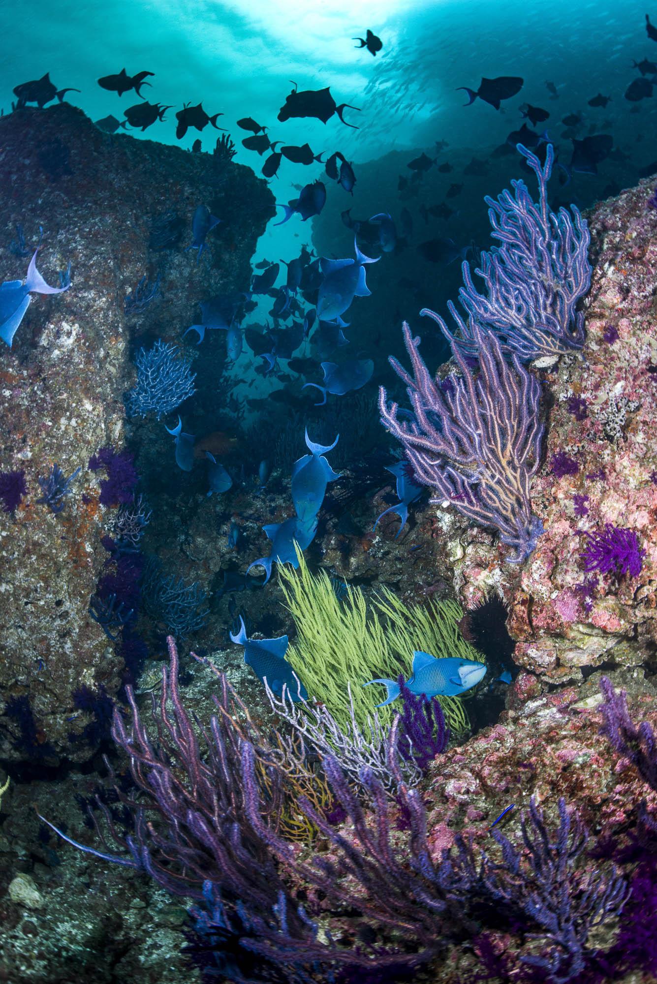 Musandam , Oman CREDIT: WARREN BAVERSTOCK / coral reef image bank
