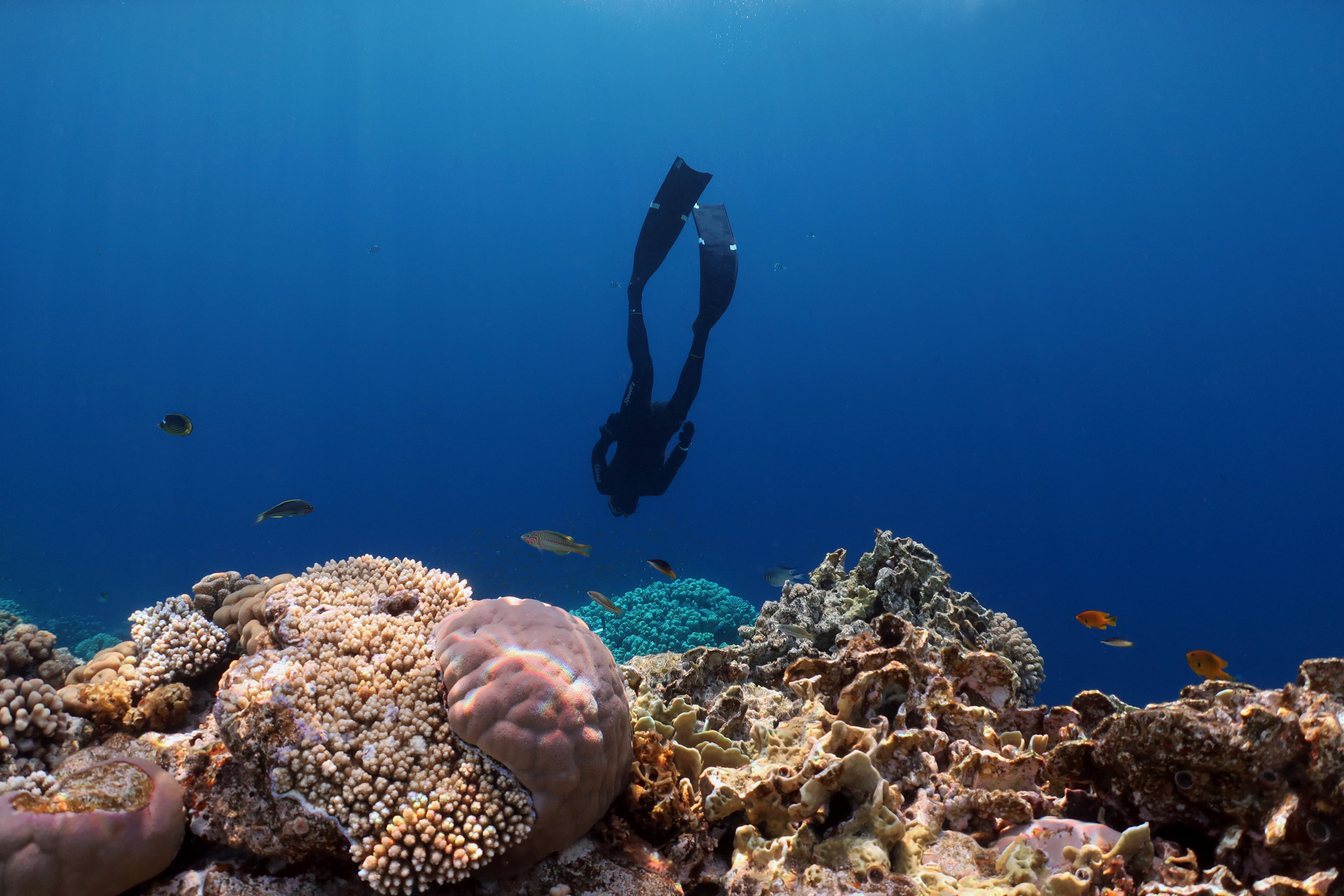 11 - FREEDIVER IN EGYPT CREDIT: ANETT SZASZI / coral reef image bank
