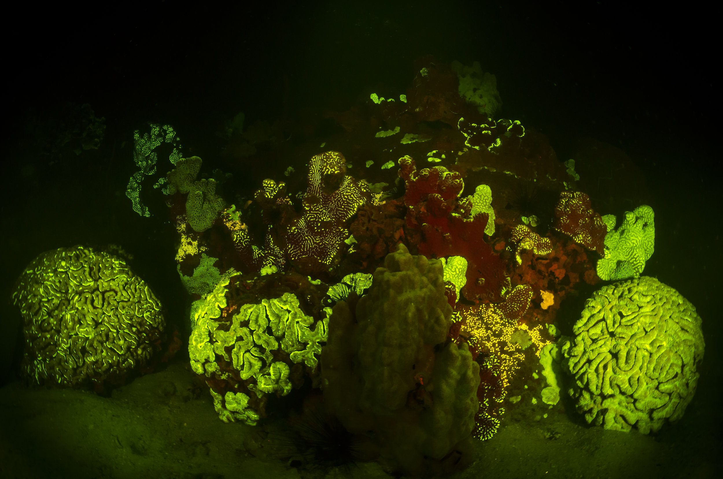 Fluorescent Reef credit: alex tyrrell/ coral reef image bank